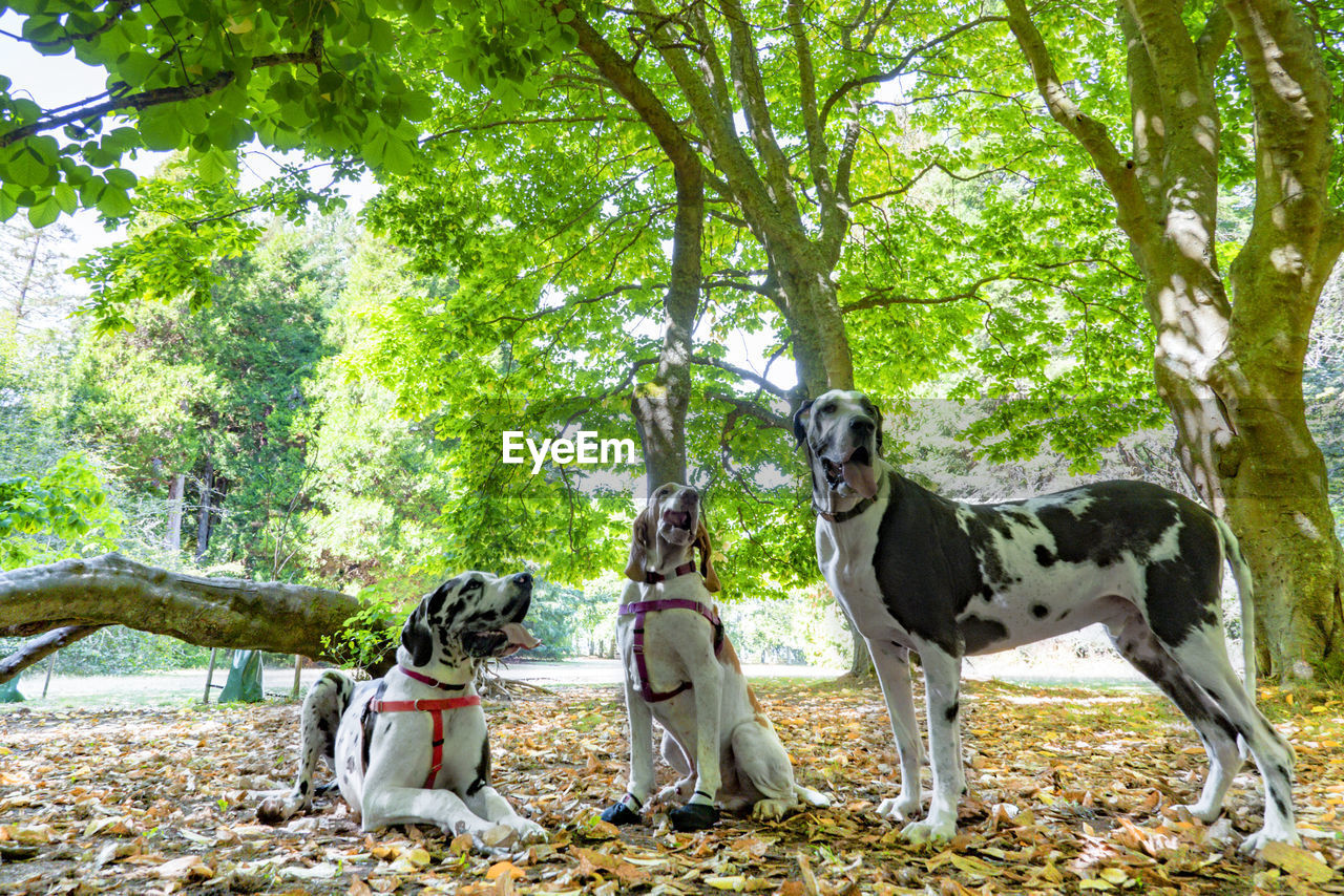tree, mammal, plant, domestic animals, domestic, nature, day, dog, canine, one animal, pets, forest, full length, sitting, outdoors, leisure activity, people, pet owner
