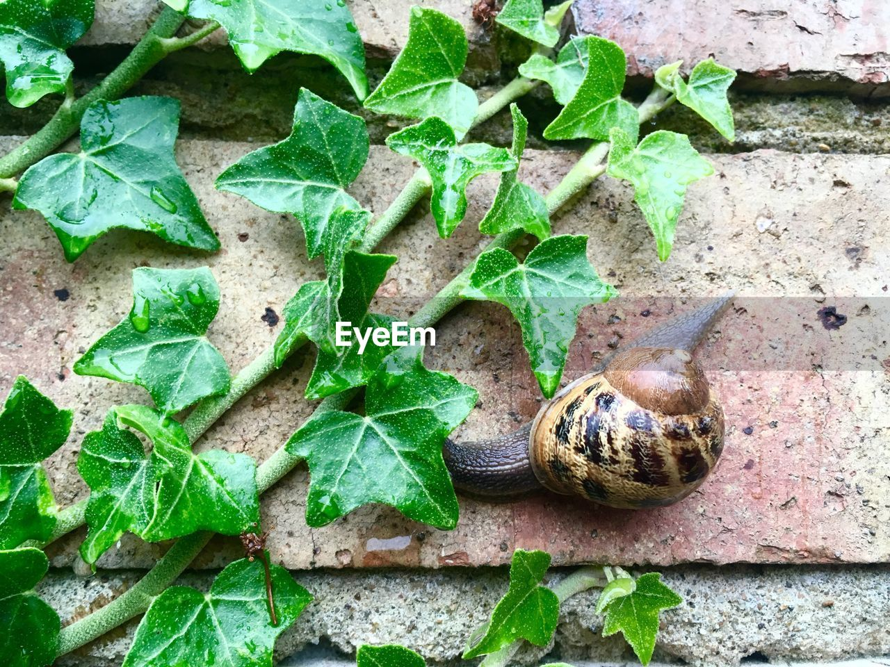 CLOSE-UP HIGH ANGLE VIEW OF SNAIL ON PLANT