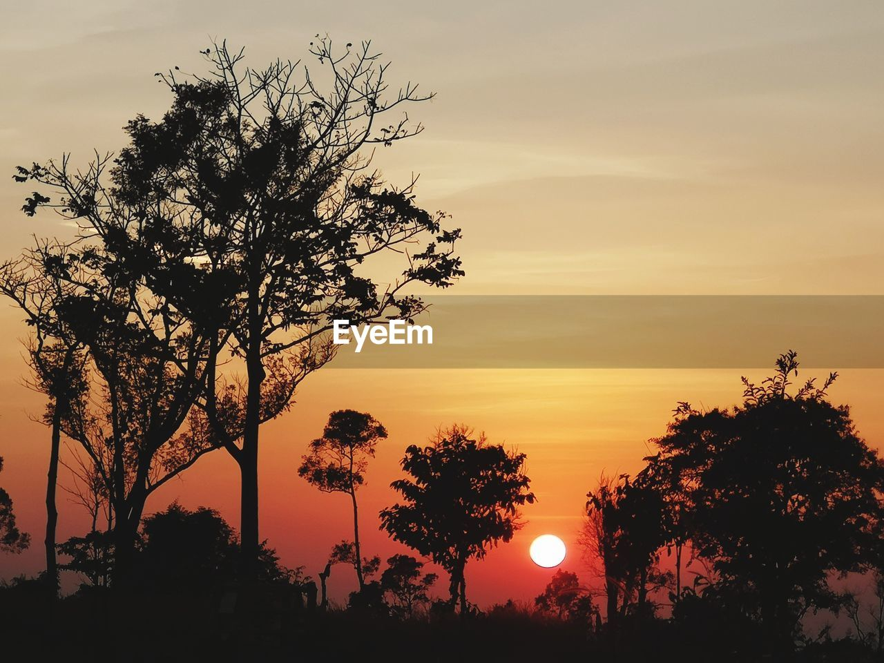 sunset, tree, sky, silhouette, plant, orange color, beauty in nature, scenics - nature, tranquil scene, tranquility, growth, nature, no people, idyllic, outdoors, sun, branch, non-urban scene, low angle view, cloud - sky