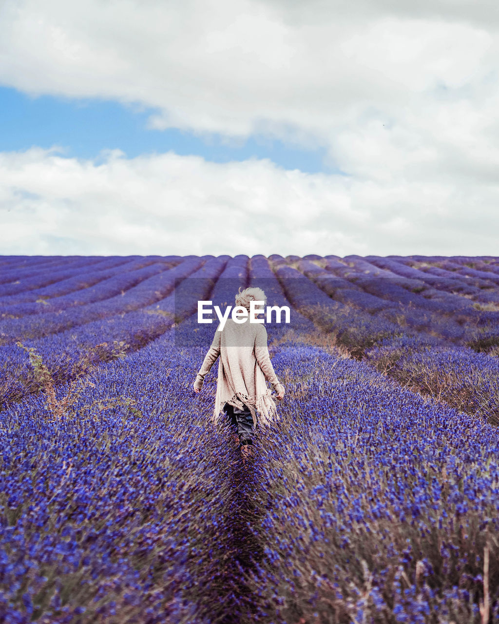 Rear View Of Woman On Lavender Field