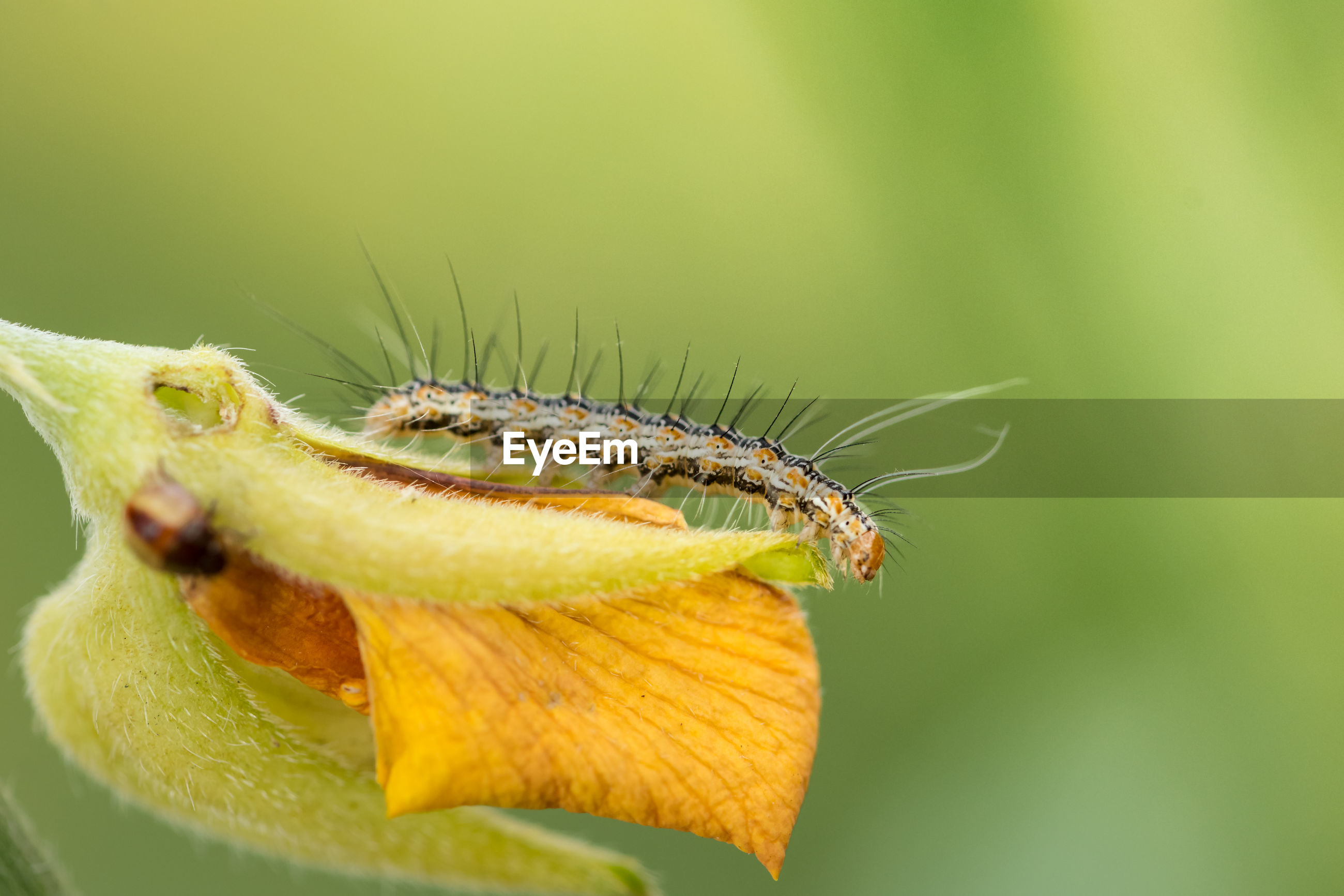 Close-up of caterpillar on flower