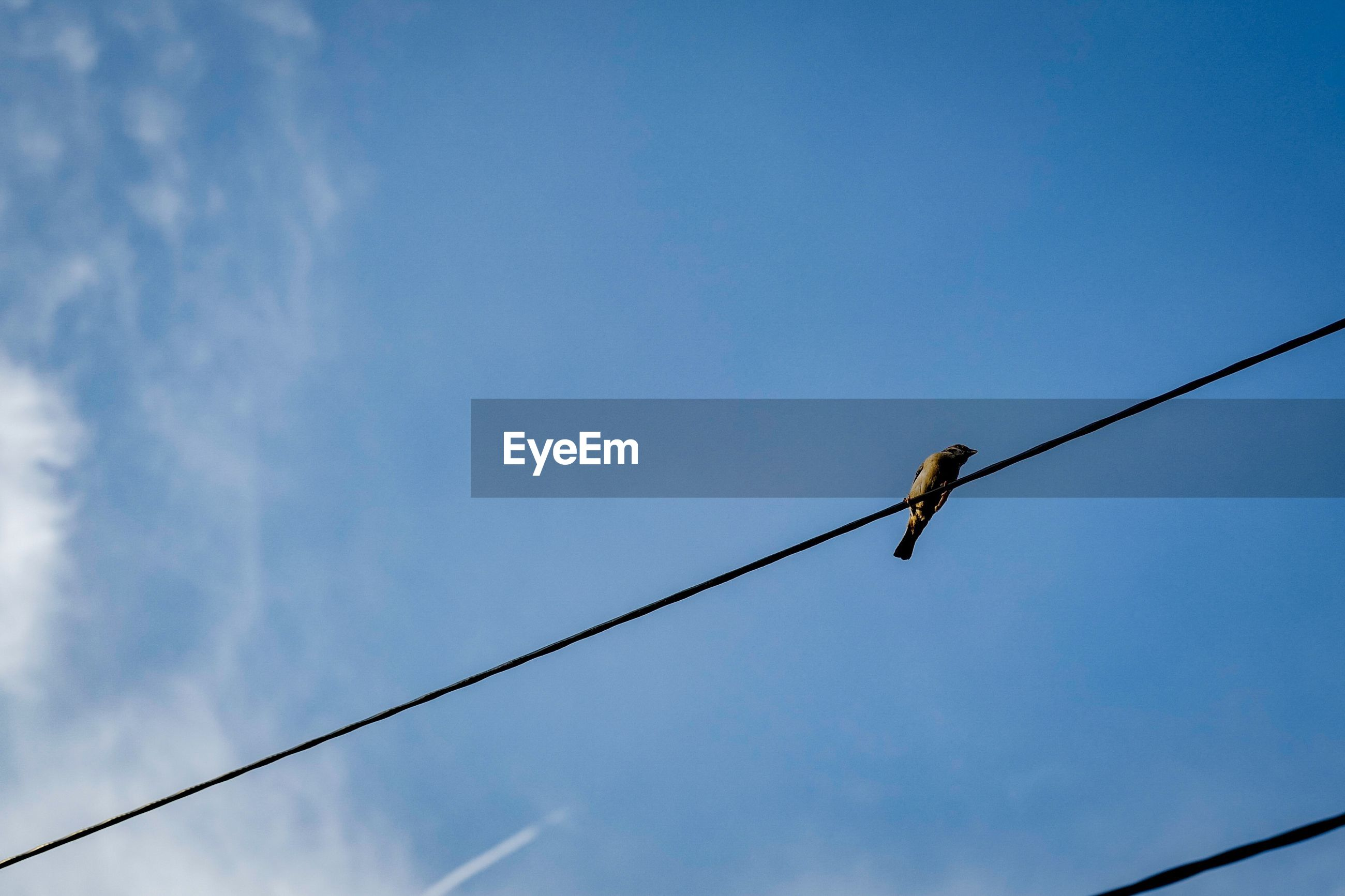 Low angle view of bird perching on cable against blue sky
