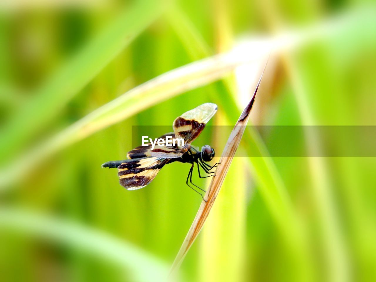 animal themes, insect, animals in the wild, one animal, green color, animal wildlife, nature, day, close-up, no people, plant, leaf, outdoors, growth, grass