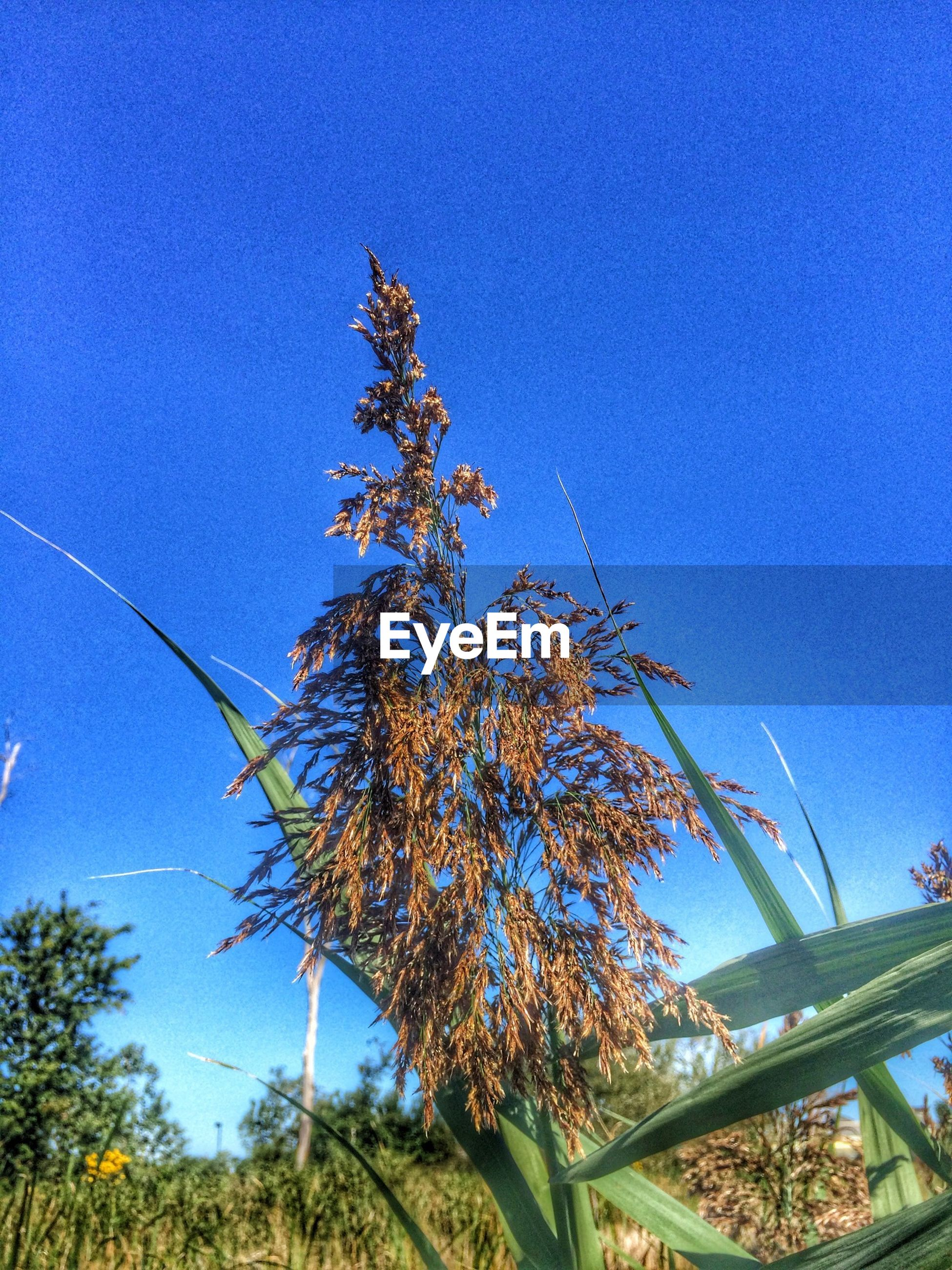 clear sky, blue, tree, growth, low angle view, copy space, branch, nature, beauty in nature, sunlight, tranquility, plant, outdoors, day, no people, sky, scenics, tranquil scene, growing, sunny