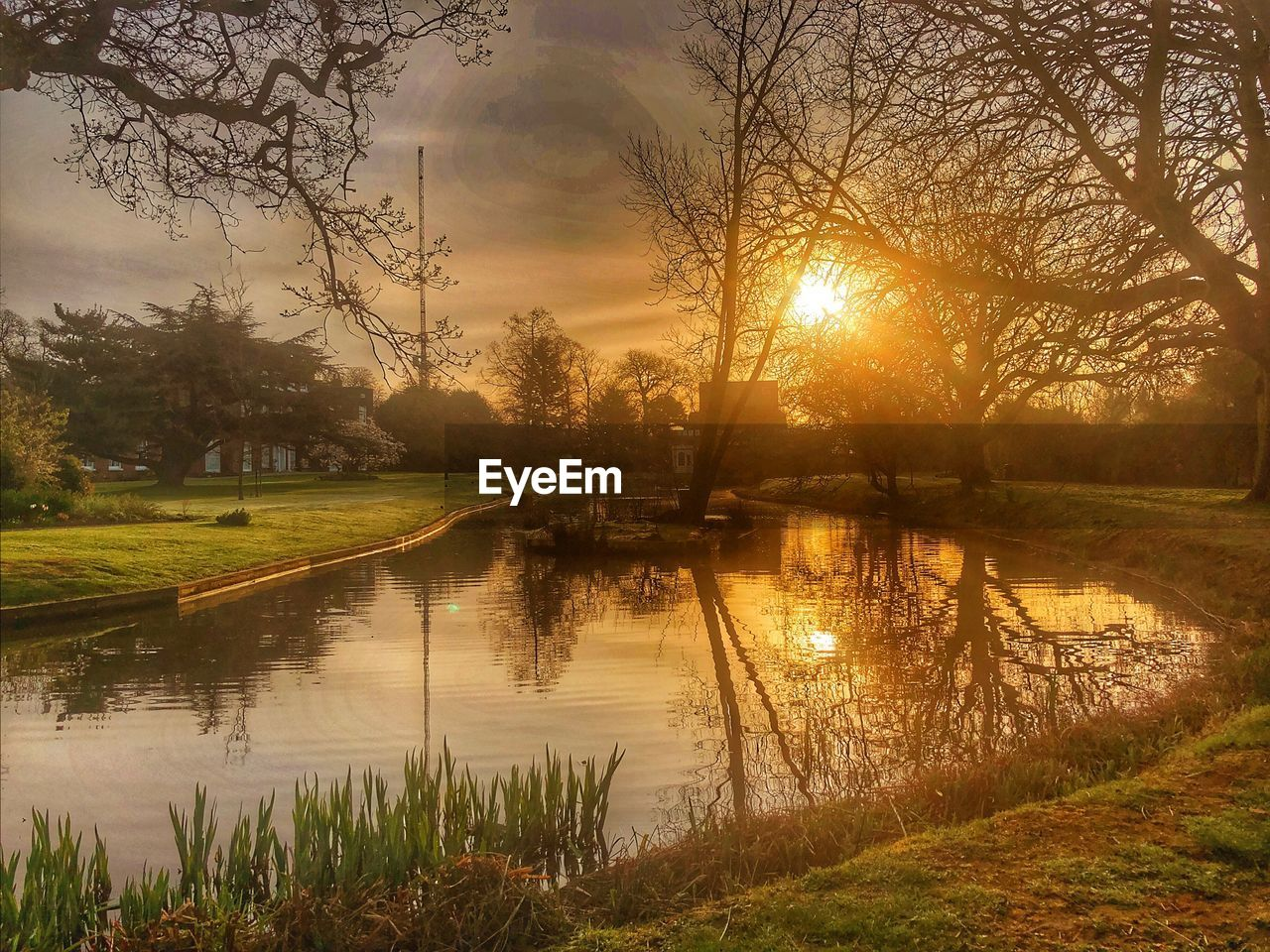 tree, water, plant, reflection, sky, tranquility, tranquil scene, beauty in nature, scenics - nature, sunset, lake, sun, nature, no people, sunlight, grass, non-urban scene, idyllic, sunbeam, outdoors, lens flare, bright