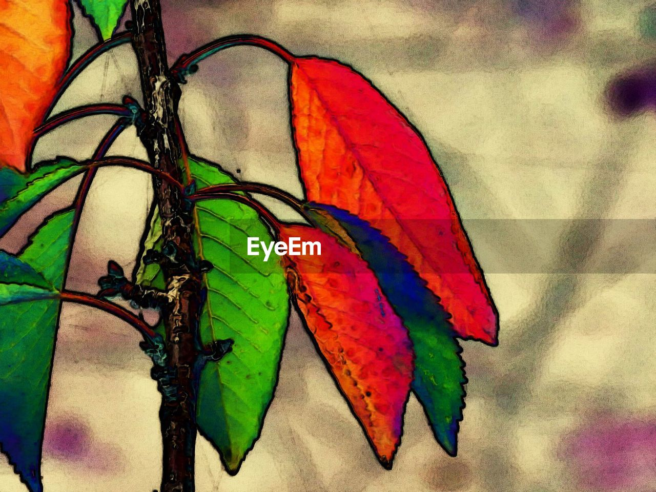 multi colored, art and craft, no people, butterfly - insect, close-up, day, leaf, outdoors, parrot, nature, animal themes