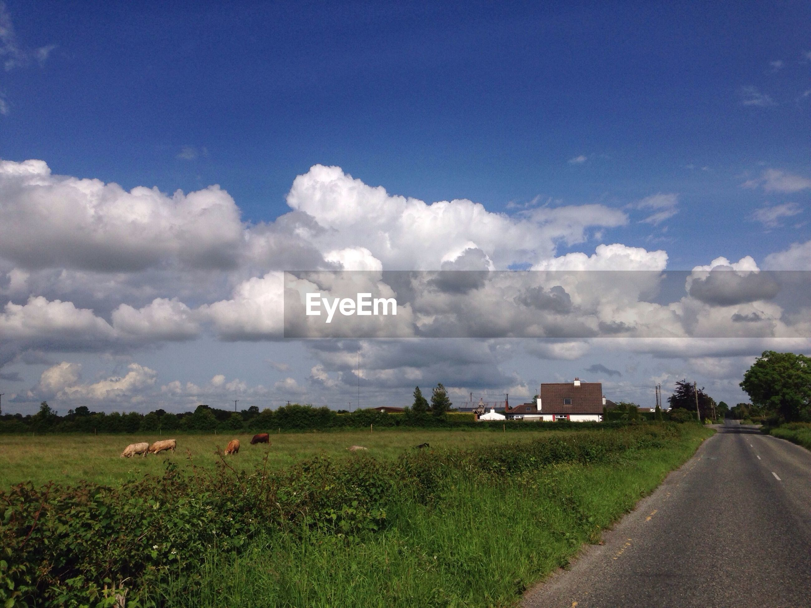 Scenic view of grassy field by street against sky
