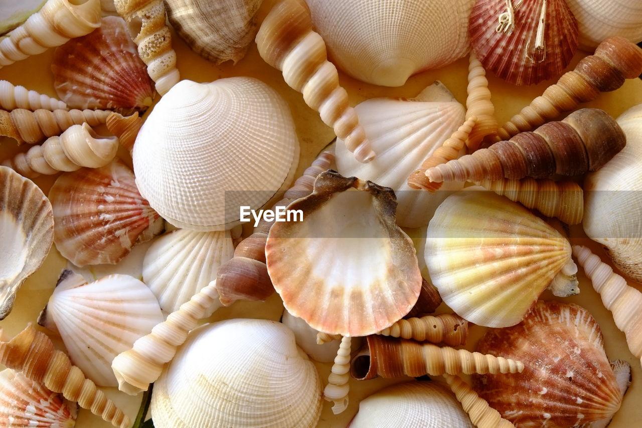 Full Frame Shot Of Shells On Table