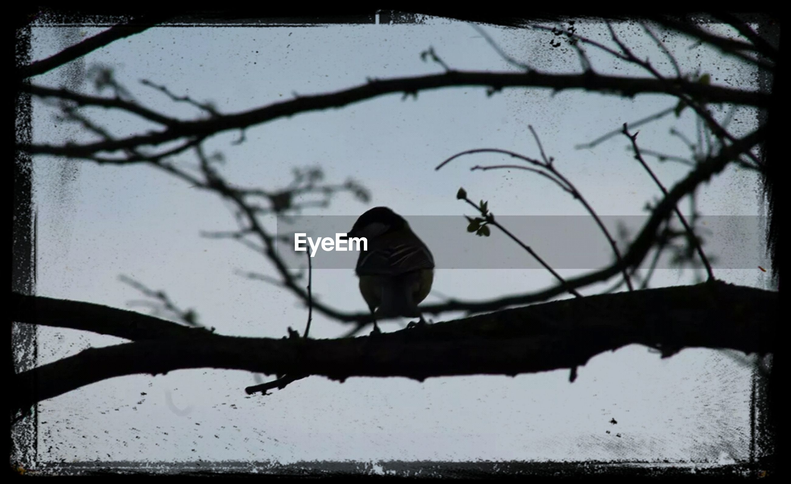 animal themes, animals in the wild, bird, wildlife, branch, perching, one animal, bare tree, low angle view, tree, nature, silhouette, focus on foreground, transfer print, full length, auto post production filter, outdoors, day, no people, sky