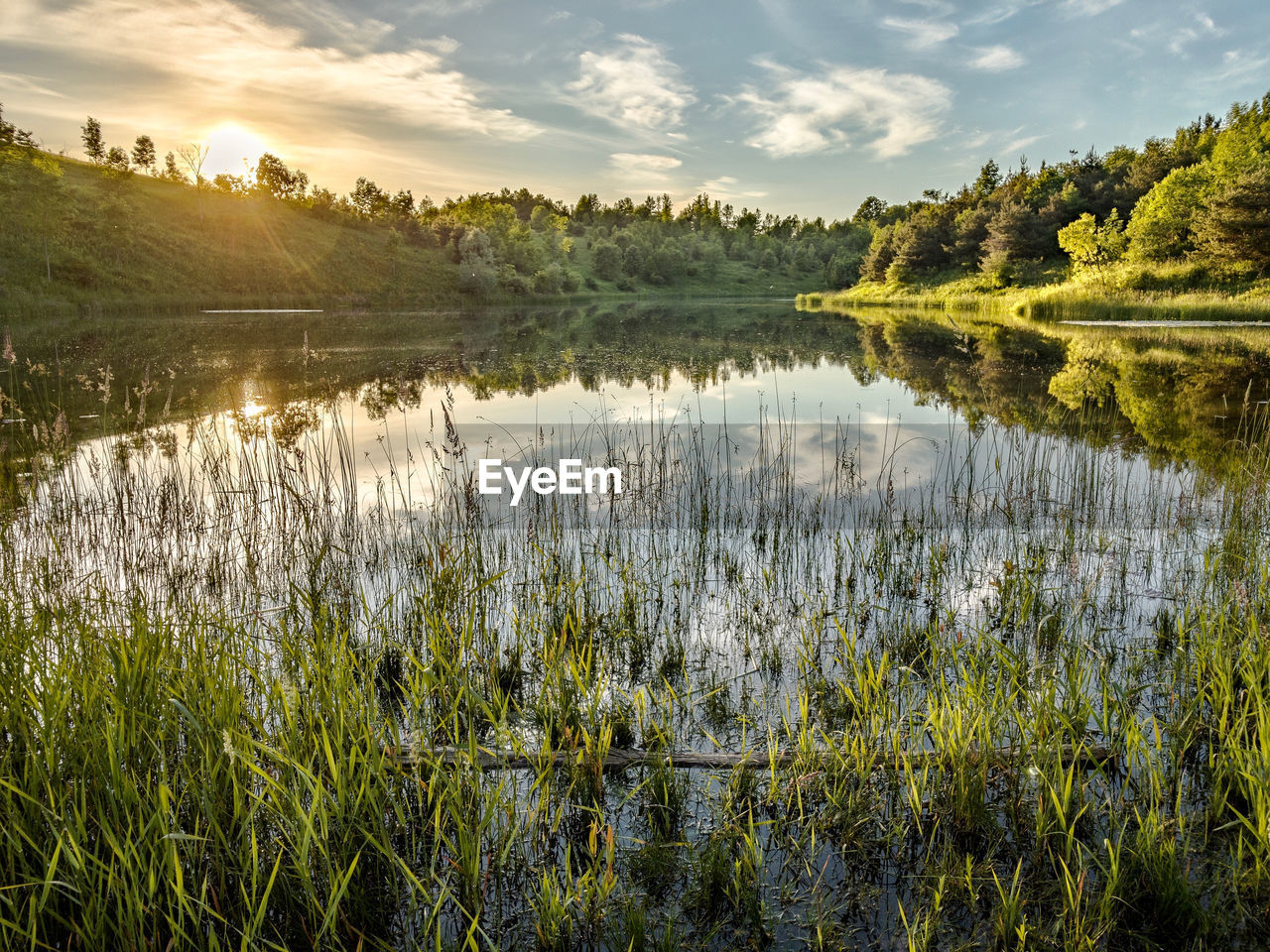plant, water, beauty in nature, sky, tranquility, tranquil scene, lake, reflection, scenics - nature, growth, cloud - sky, nature, no people, tree, environment, grass, green color, land, landscape, outdoors