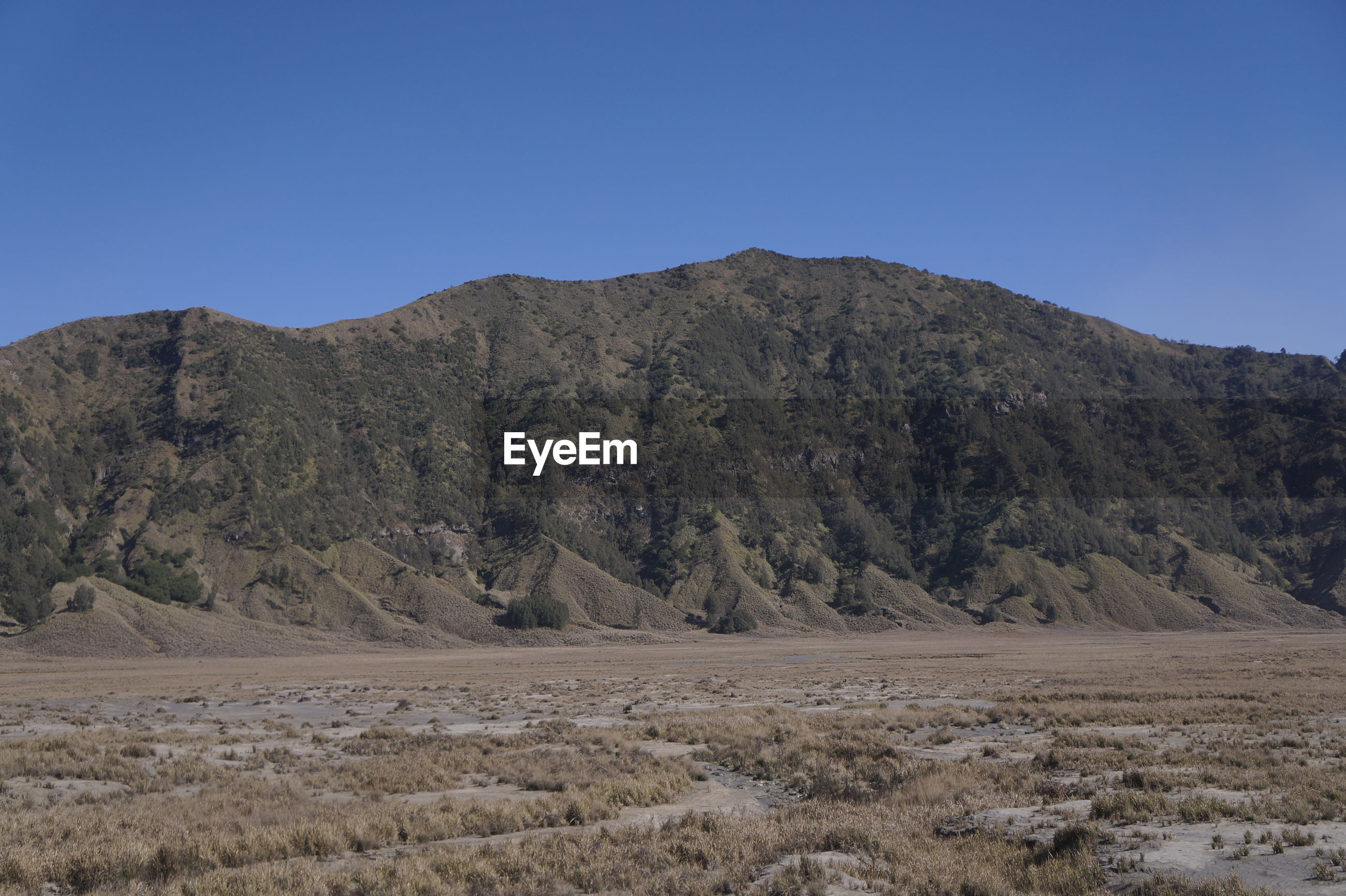 Bromo caldera is overgrown with dry and sandy grass.