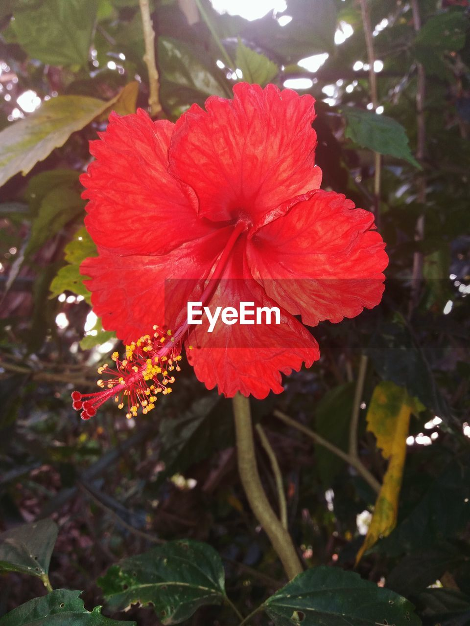 flower, growth, fragility, red, nature, beauty in nature, petal, flower head, freshness, plant, day, no people, outdoors, hibiscus, blooming, close-up, water