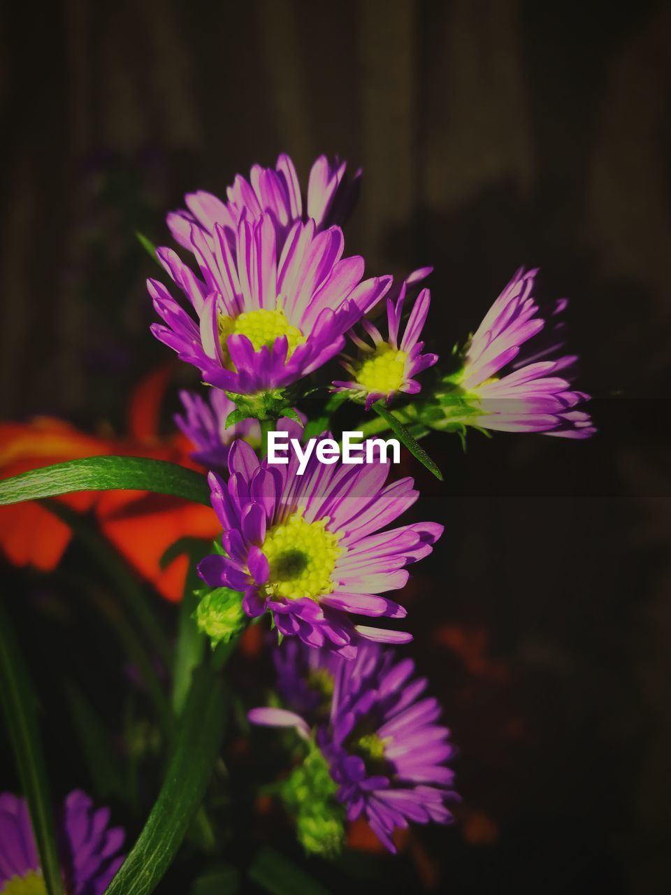 flowering plant, flower, plant, vulnerability, fragility, freshness, petal, beauty in nature, flower head, close-up, inflorescence, growth, nature, focus on foreground, purple, no people, selective focus, plant part, leaf, botany, pollen