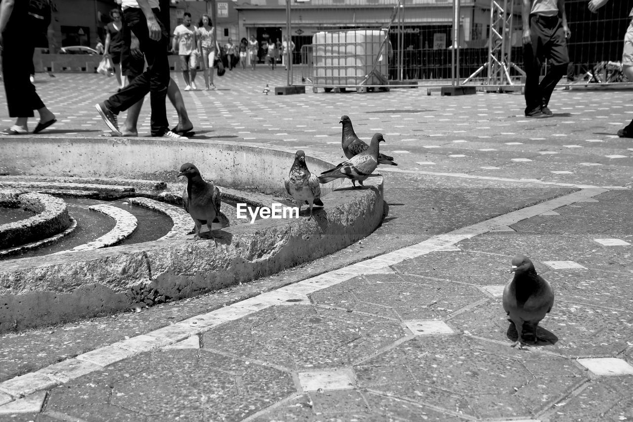 Close-Up Of Pigeons On Paved Street