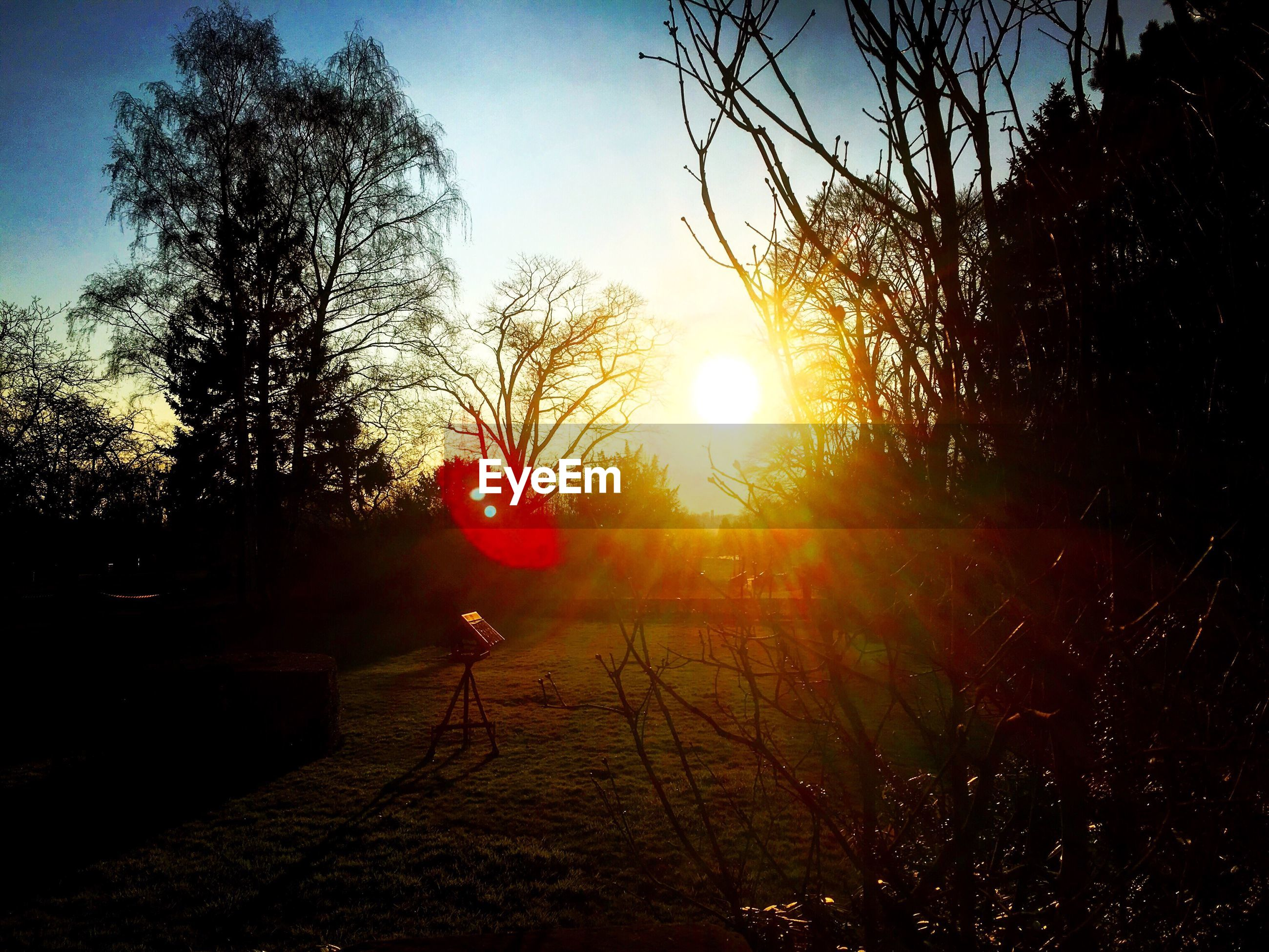 sun, tree, sunset, sunlight, lens flare, silhouette, sky, sunbeam, tranquility, nature, branch, beauty in nature, clear sky, tranquil scene, scenics, growth, outdoors, field, no people, bare tree