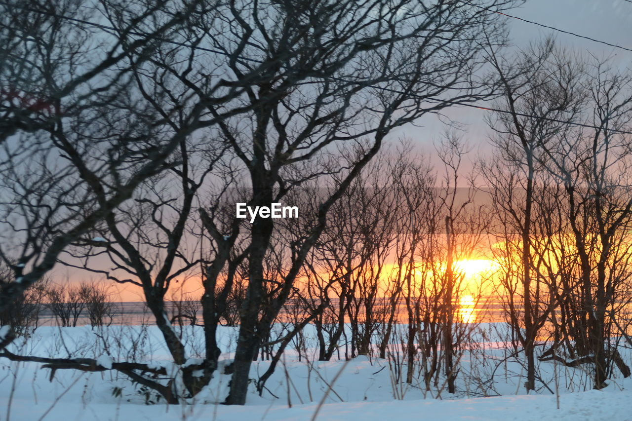 cold temperature, snow, winter, tree, bare tree, sunset, tranquility, sky, beauty in nature, scenics - nature, branch, plant, tranquil scene, sun, nature, no people, non-urban scene, land, frozen, outdoors
