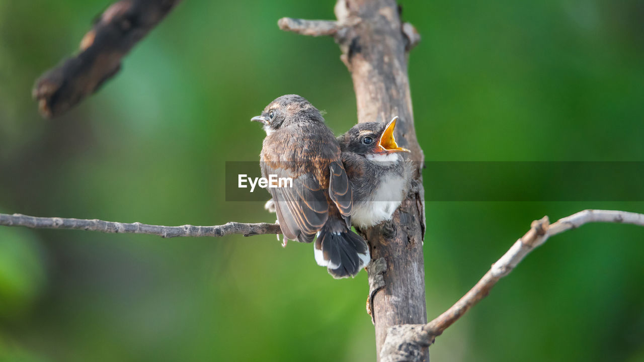 bird, animals in the wild, animal themes, animal wildlife, perching, branch, focus on foreground, one animal, nature, no people, tree, outdoors, day, sparrow, close-up