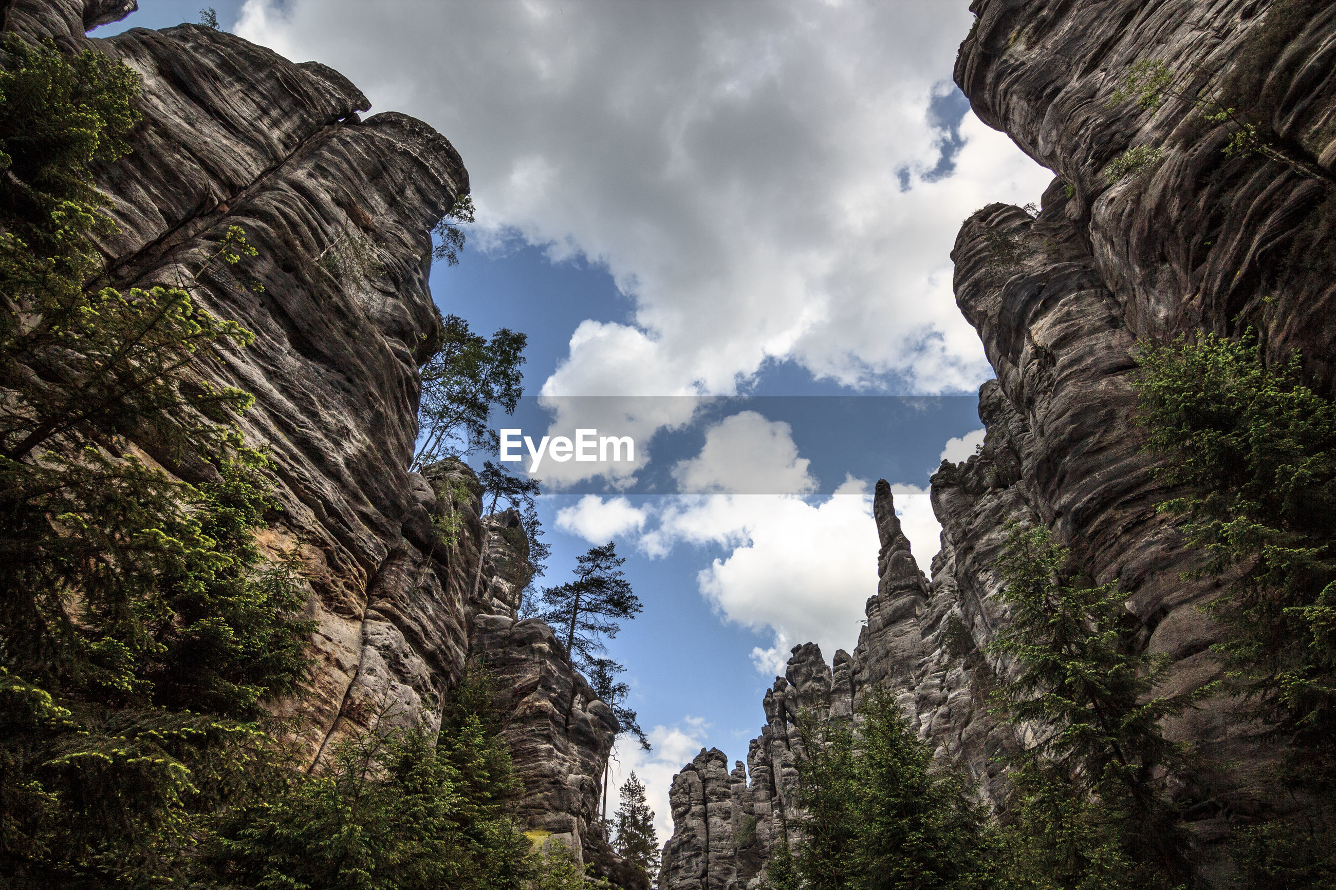LOW ANGLE VIEW OF TREES ON CLIFF AGAINST SKY