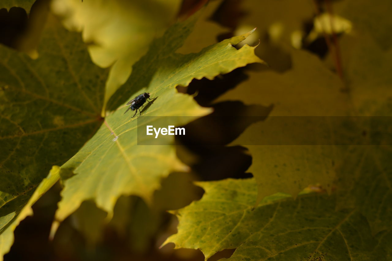 leaf, insect, one animal, animal themes, animals in the wild, nature, animal wildlife, close-up, green color, plant, no people, outdoors, day, beauty in nature, growth, fragility