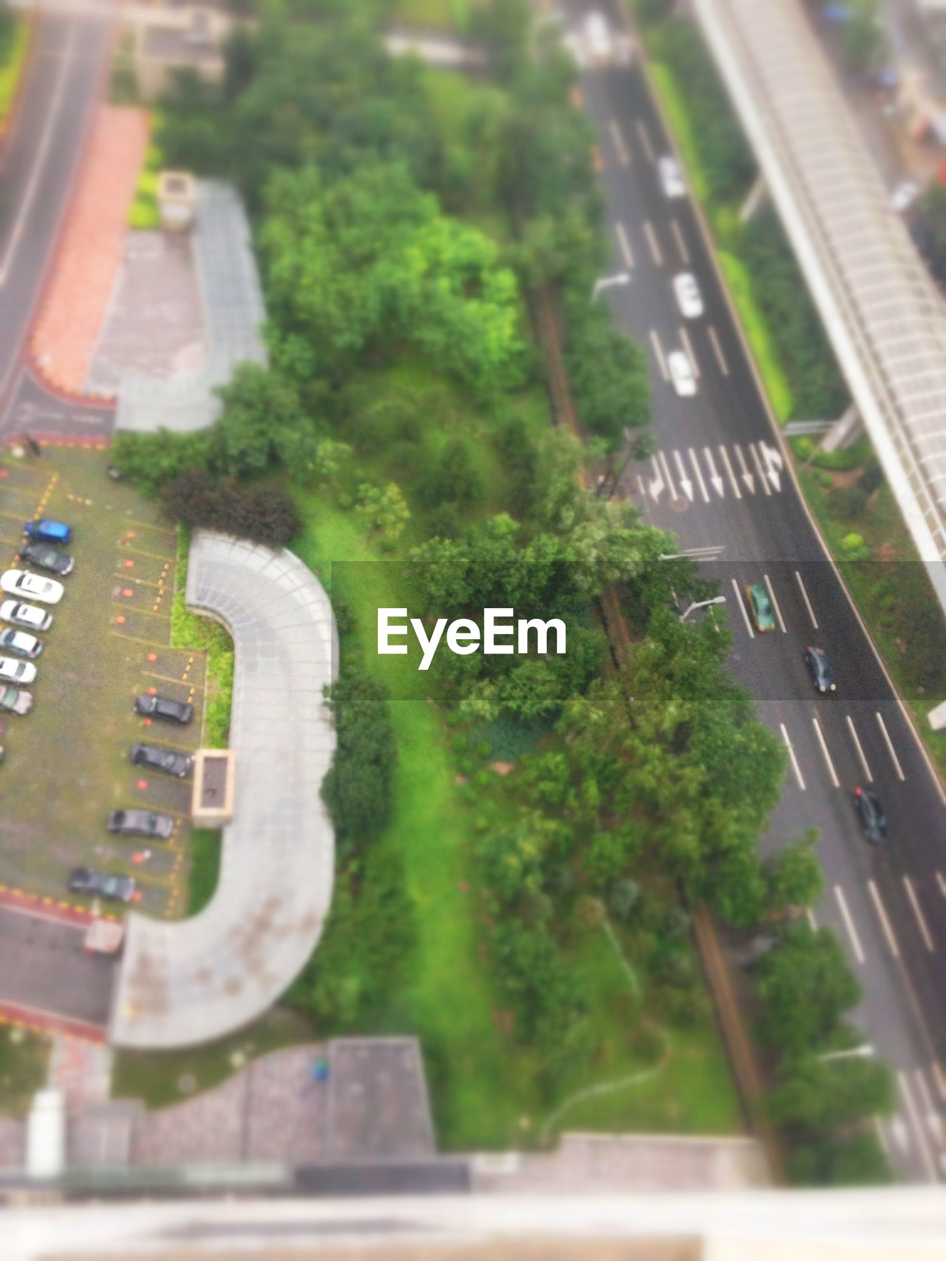 High angle view of street and trees