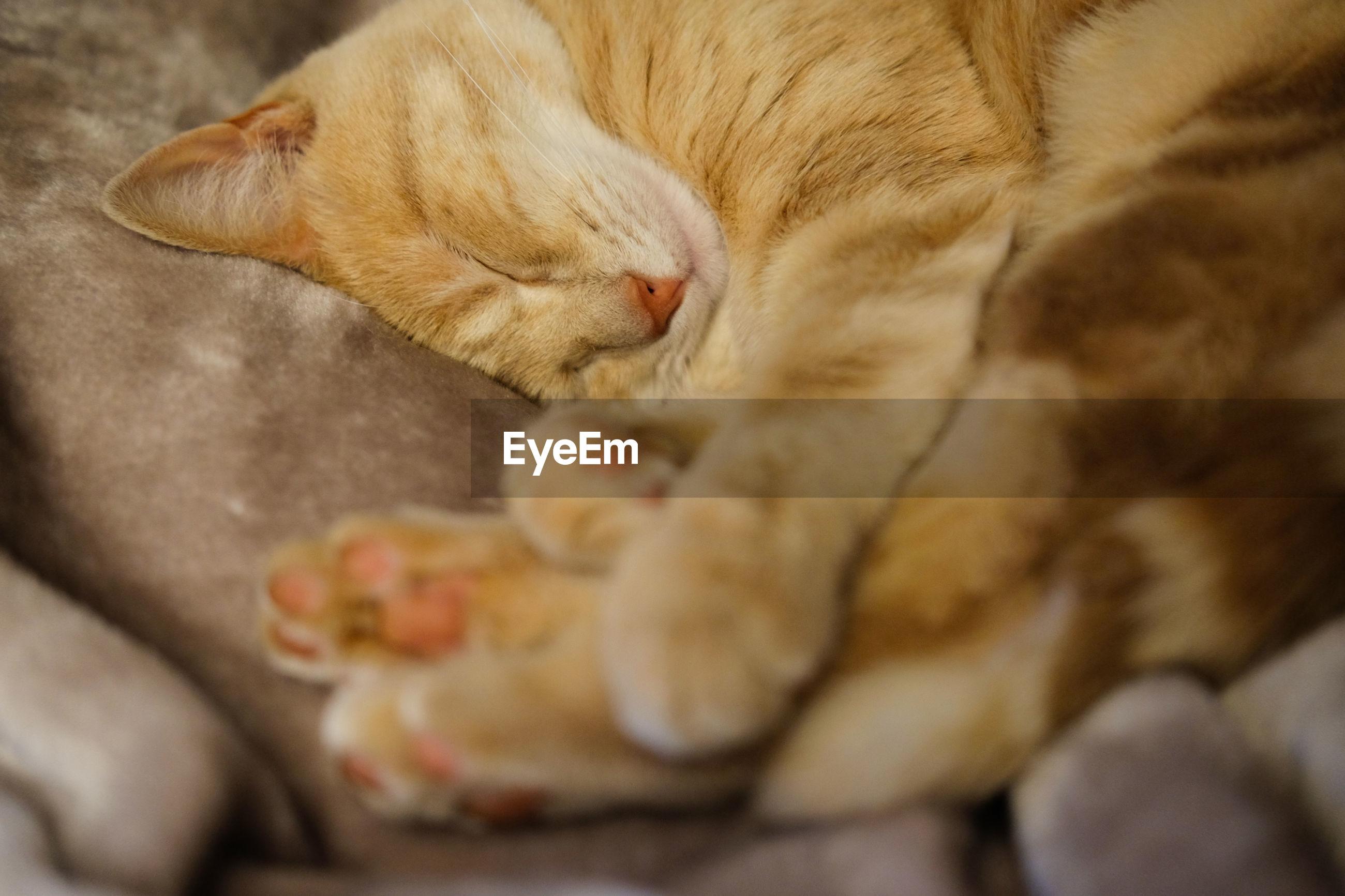 Close-up of cat sleeping at home