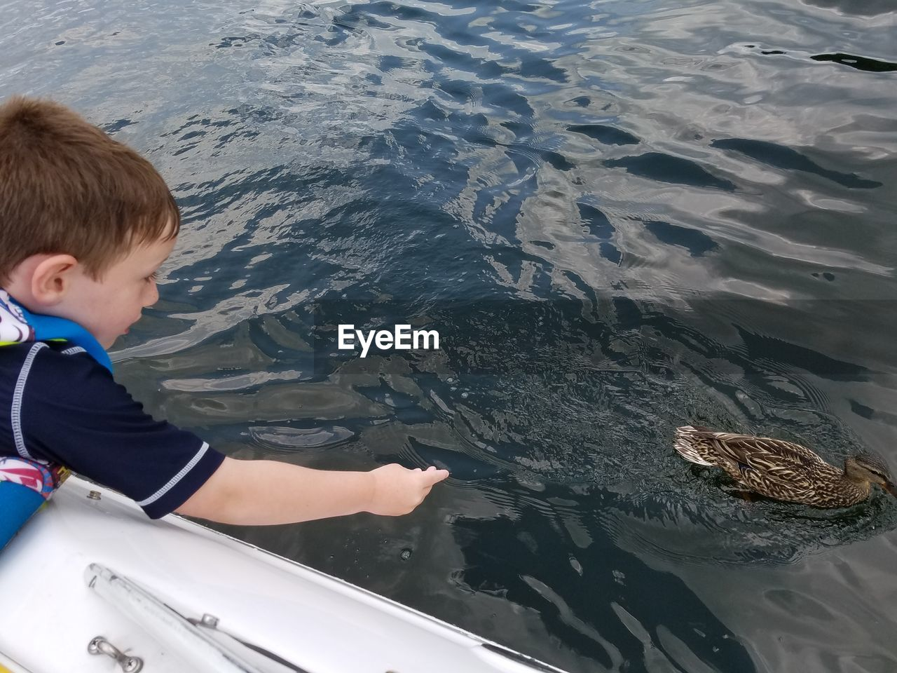 Boy By Mallard Duck In Boat On Lake