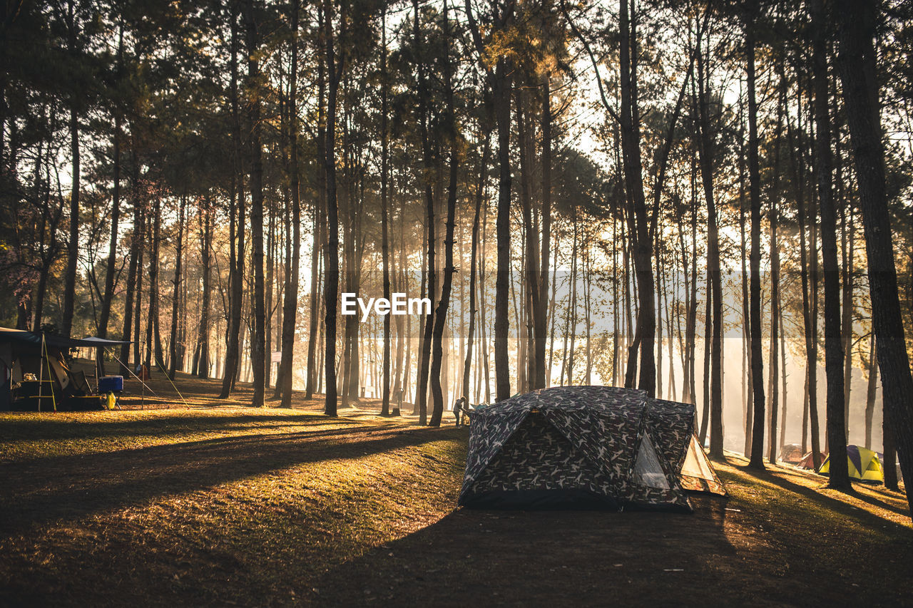 Tent in forest at morning
