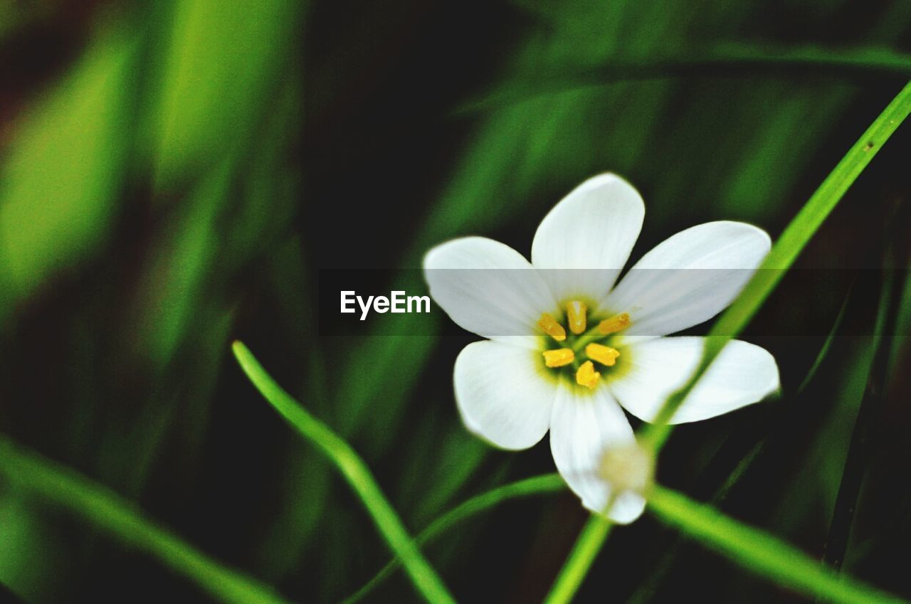 flower, nature, growth, petal, fragility, beauty in nature, white color, plant, freshness, flower head, blooming, close-up, no people, outdoors, day