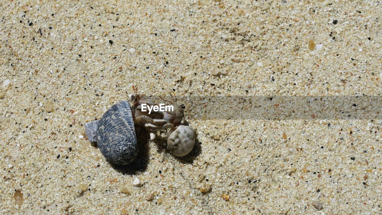 Close-up of hermit crabs on sand
