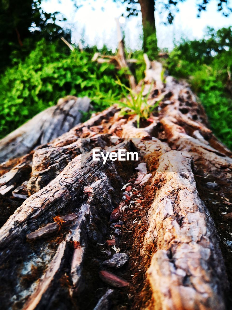 plant, tree, tree trunk, wood - material, trunk, nature, selective focus, day, wood, close-up, forest, textured, focus on foreground, land, no people, bark, growth, log, outdoors, rough, woodland, surface level