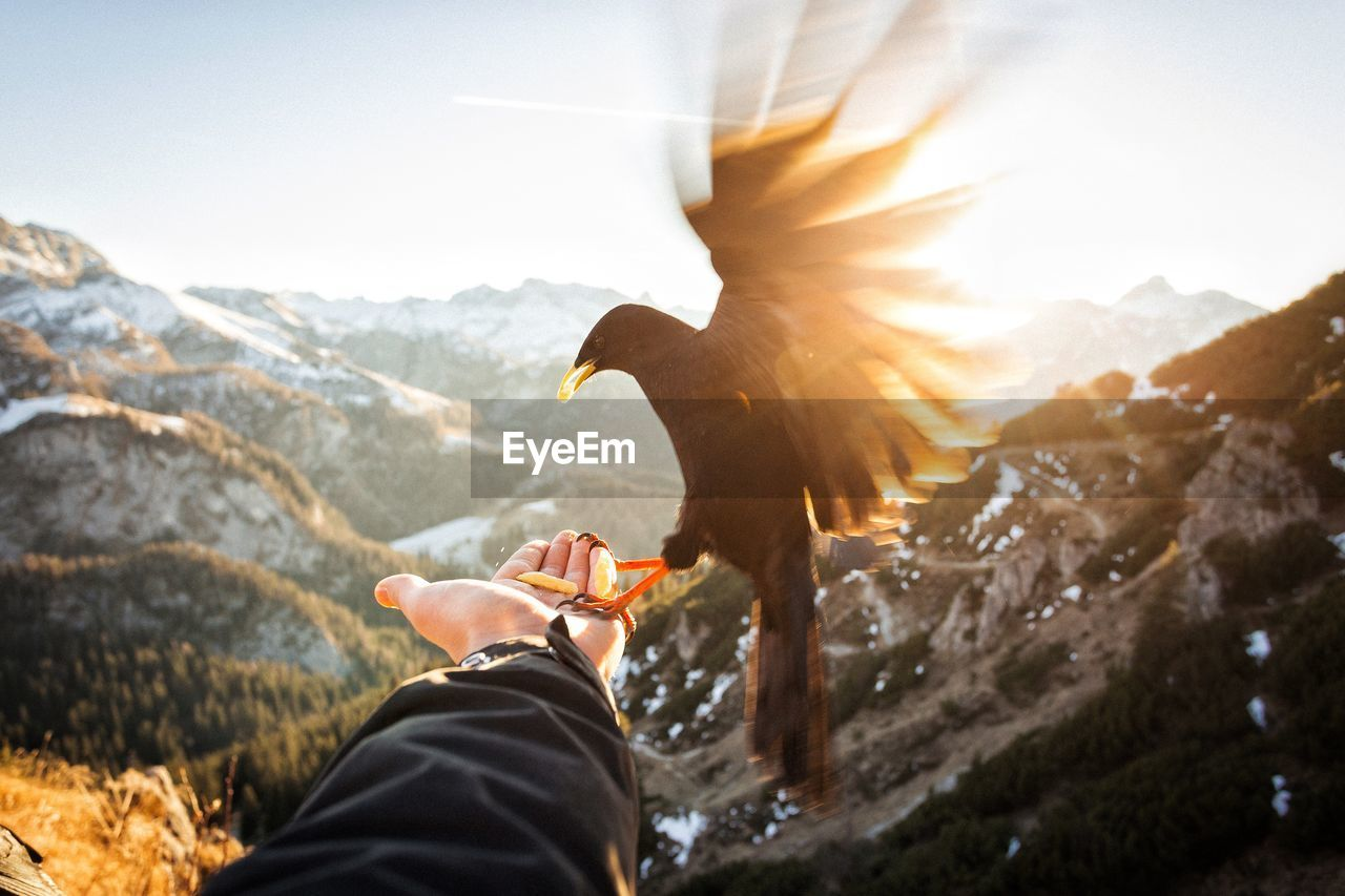 Cropped Image Of Hand Holding Bird Against Mountains During Sunset