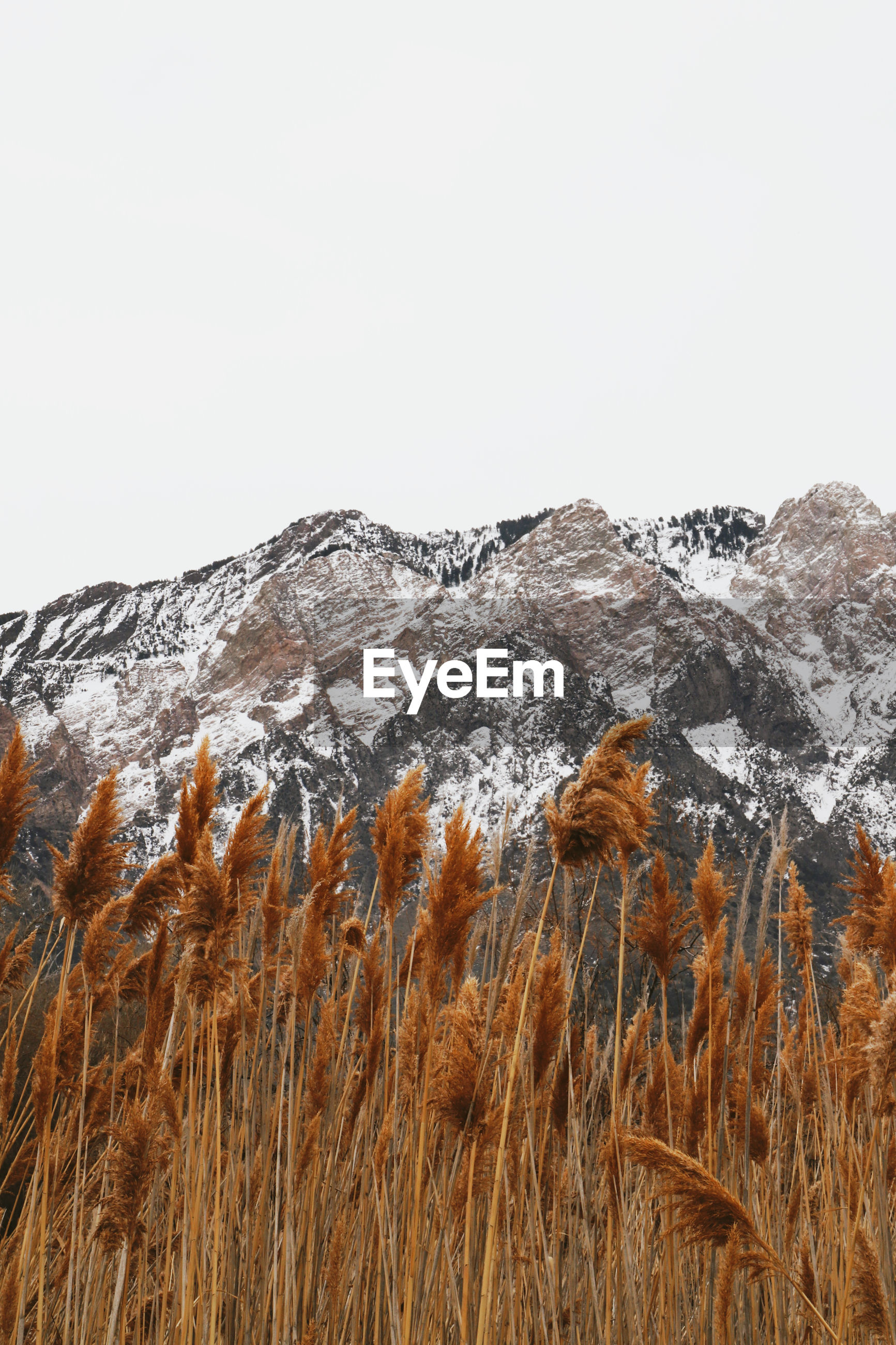 SCENIC VIEW OF SNOWCAPPED FIELD AGAINST CLEAR SKY
