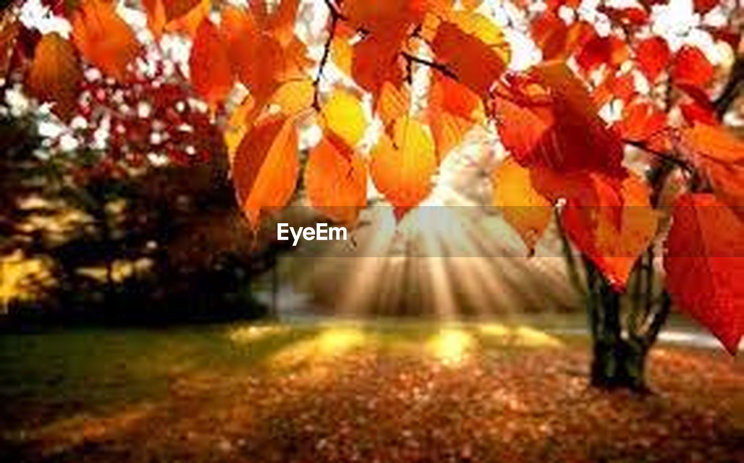 autumn, change, season, leaf, orange color, leaves, tree, selective focus, nature, red, beauty in nature, tranquility, fallen, maple leaf, falling, focus on foreground, growth, outdoors, no people, day