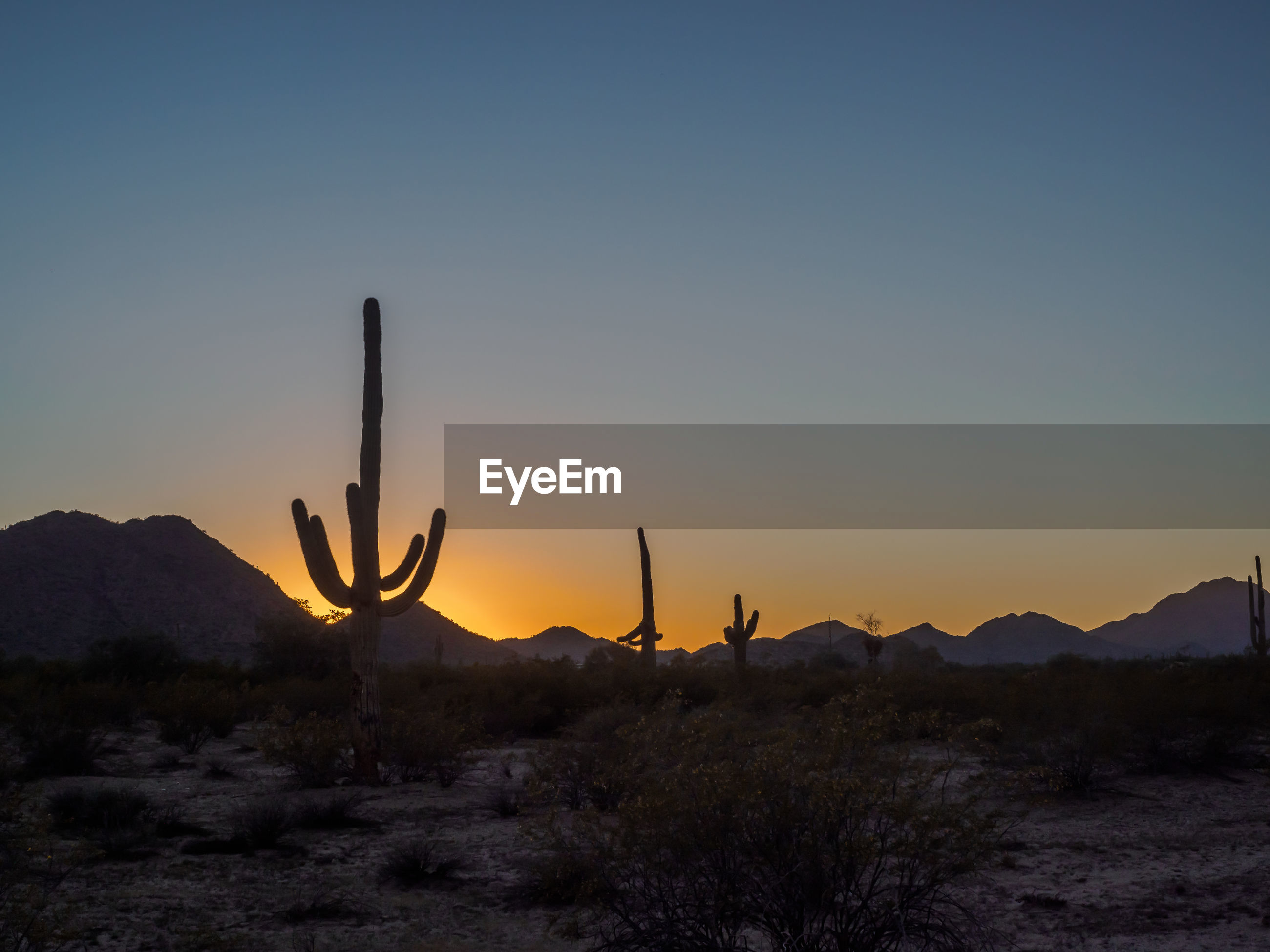 SILHOUETTE CACTUS IN DESERT DURING SUNSET