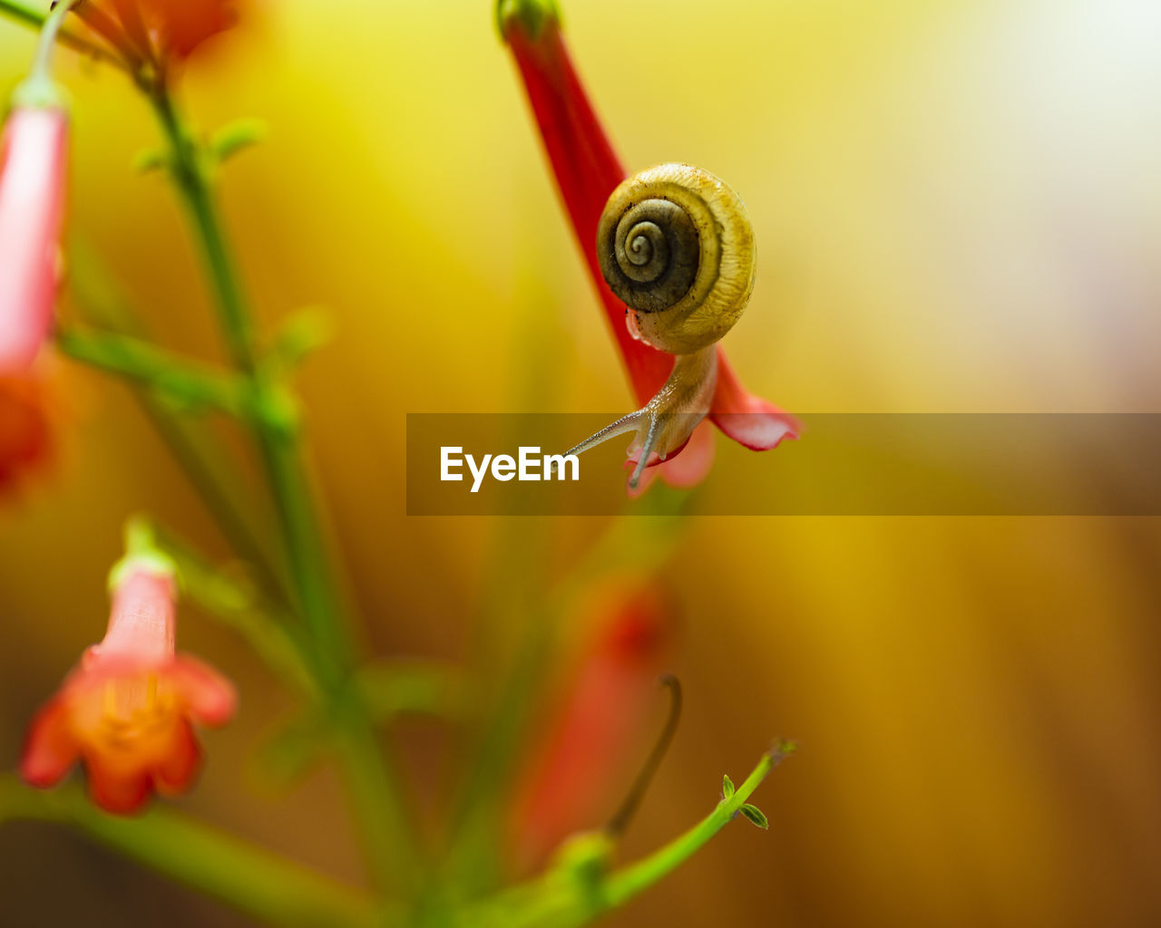 close-up, animal themes, one animal, animal wildlife, animal, mollusk, invertebrate, plant, snail, selective focus, gastropod, animals in the wild, no people, green color, shell, flower, nature, flowering plant, beauty in nature, animal shell