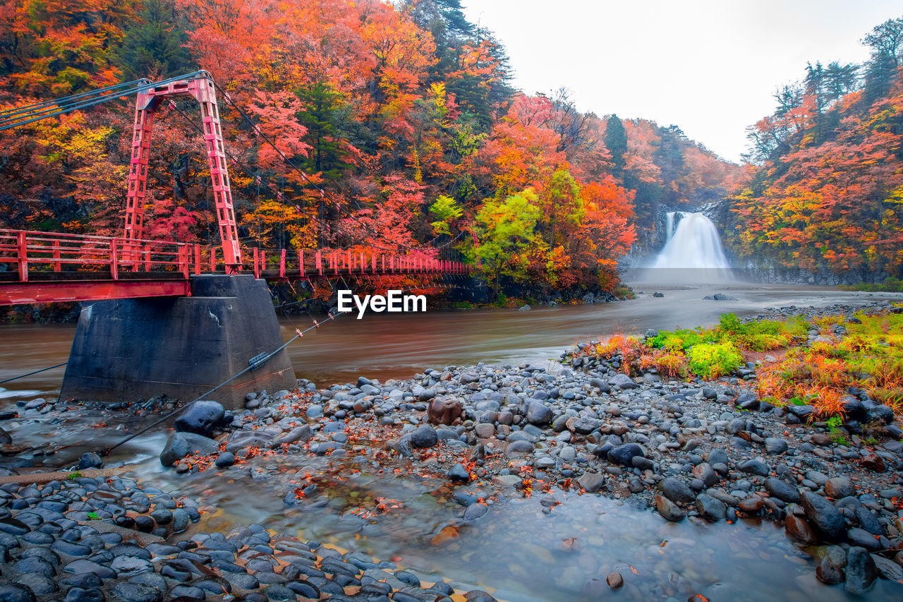 water, autumn, tree, change, plant, nature, beauty in nature, motion, orange color, day, scenics - nature, long exposure, no people, forest, lake, flowing water, connection, growth, blurred motion, outdoors, autumn collection, flowing, fall
