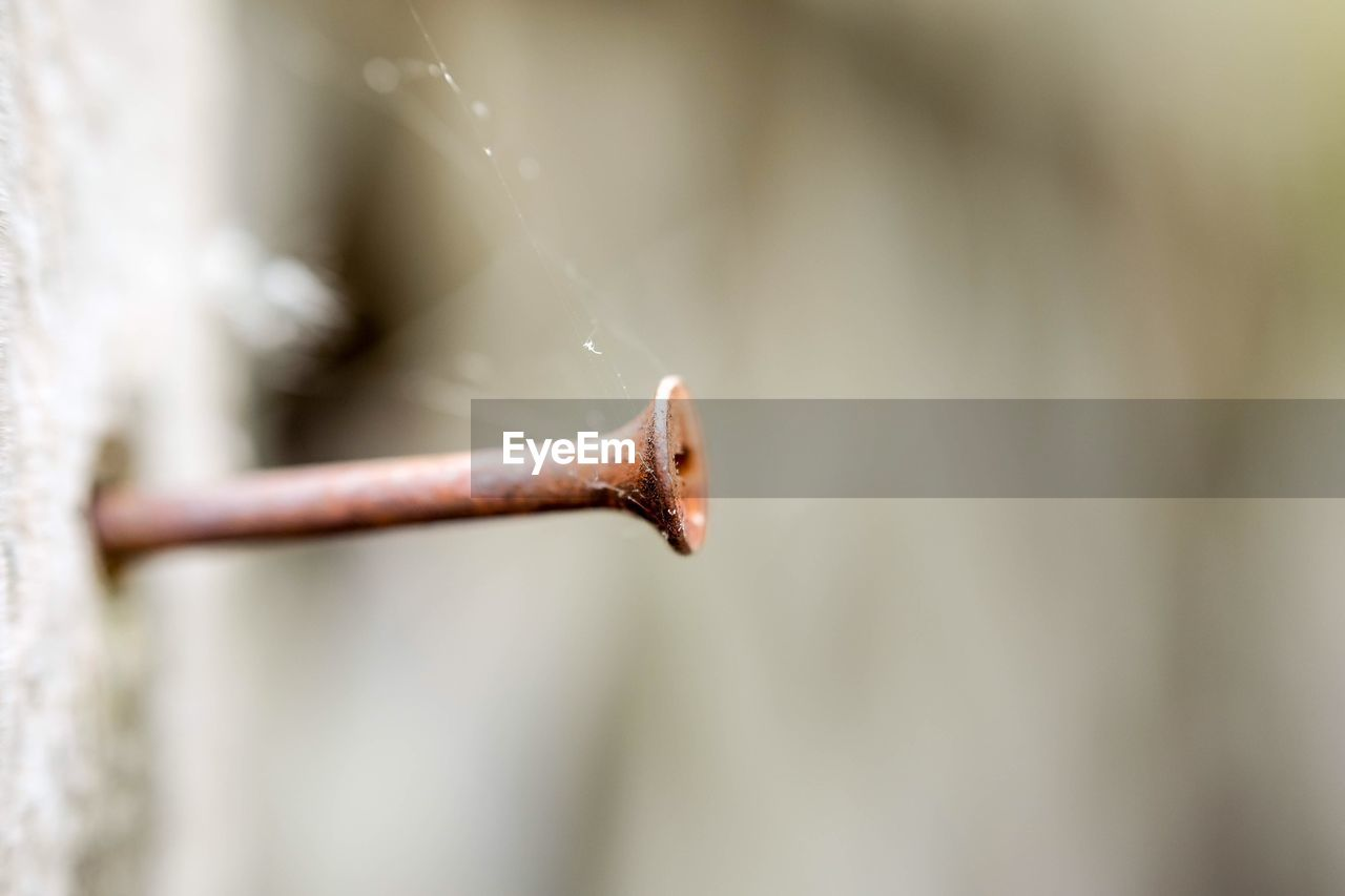 Close-up of rusty nail mounted in wood