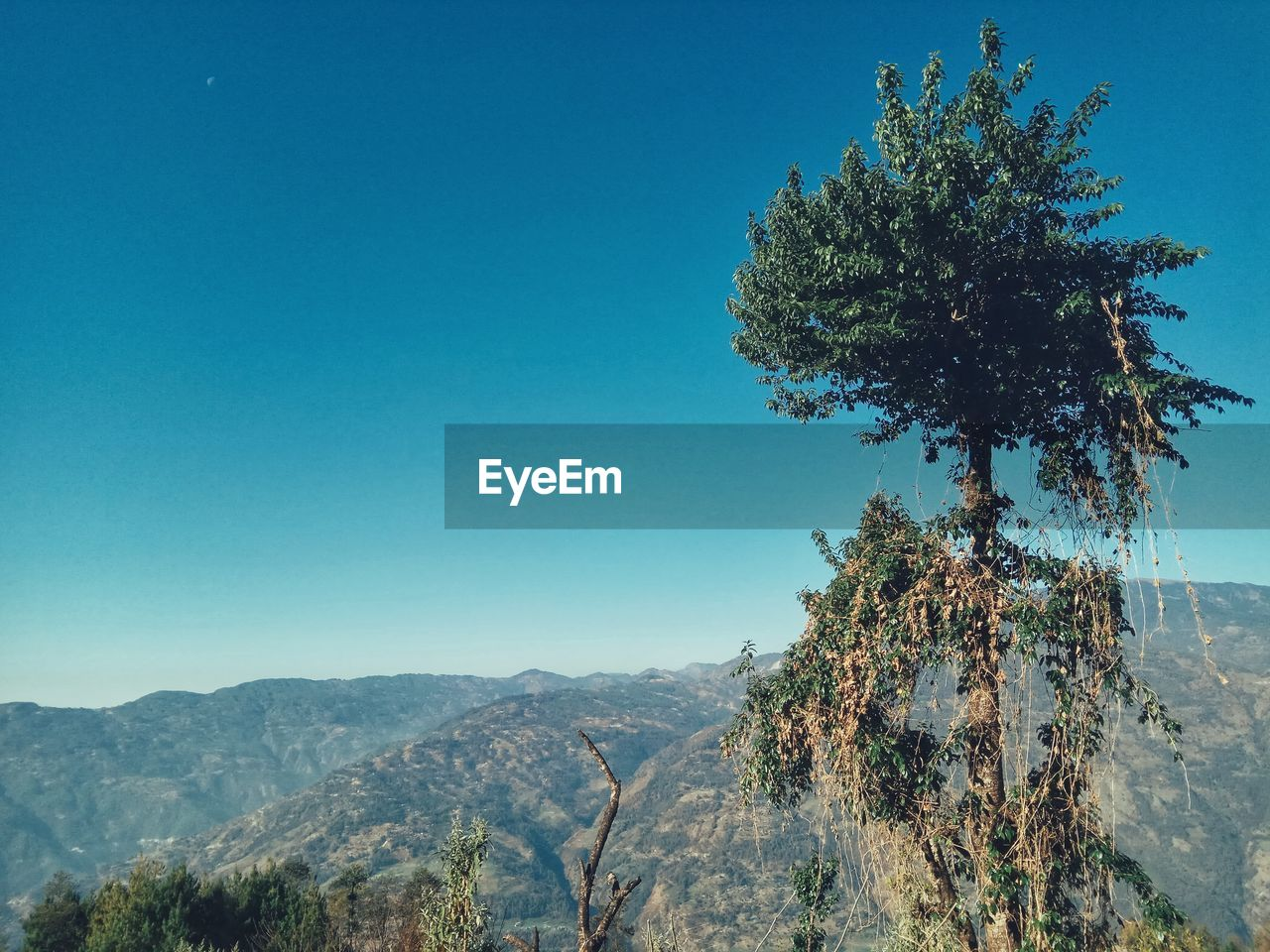 tree, mountain, nature, beauty in nature, tranquil scene, clear sky, tranquility, no people, day, scenics, growth, outdoors, blue, mountain range, landscape, branch, sky
