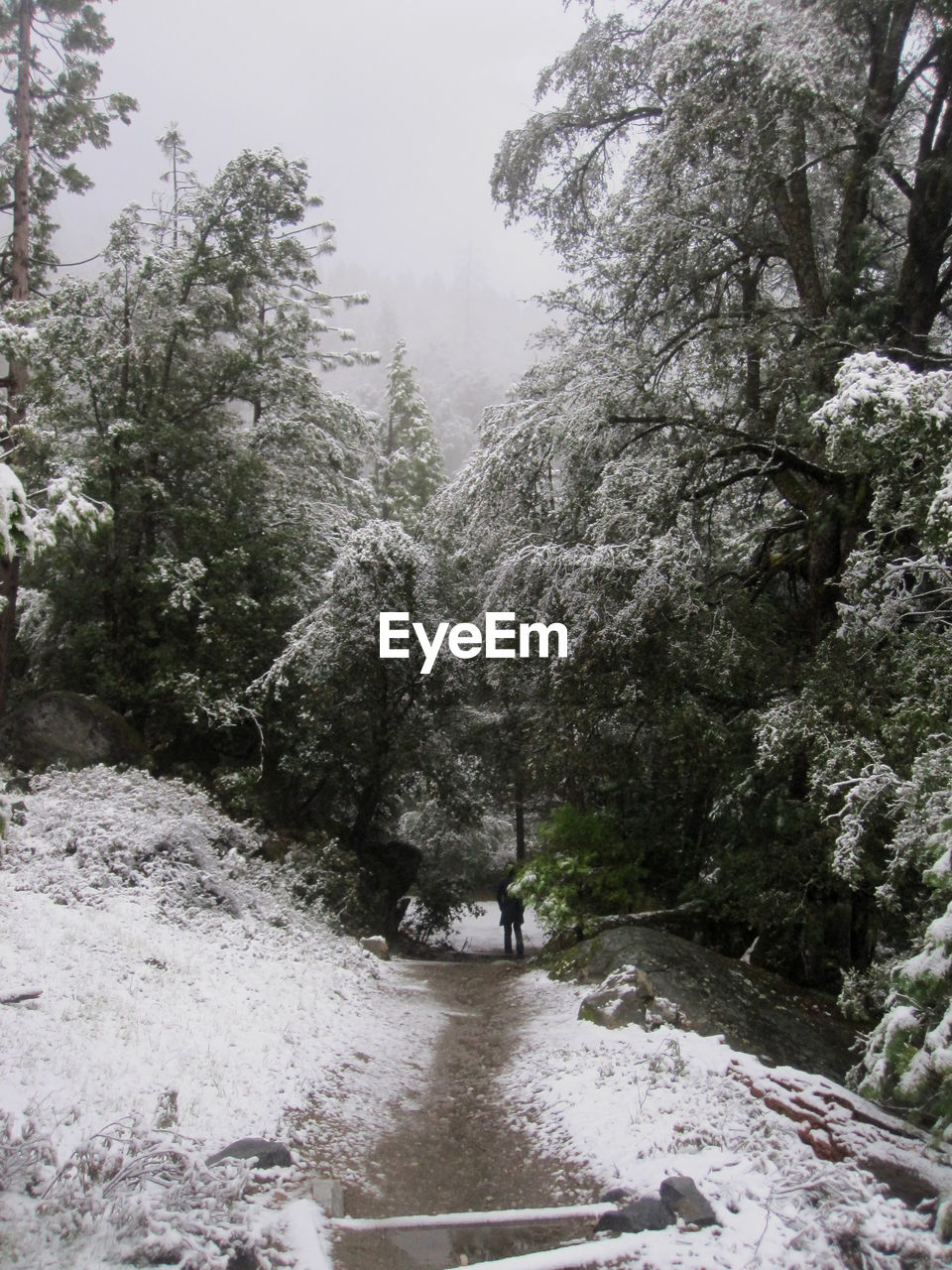 plant, tree, nature, snow, cold temperature, no people, day, beauty in nature, winter, scenics - nature, water, tranquility, forest, growth, outdoors, river, direction, the way forward, flowing water, flowing