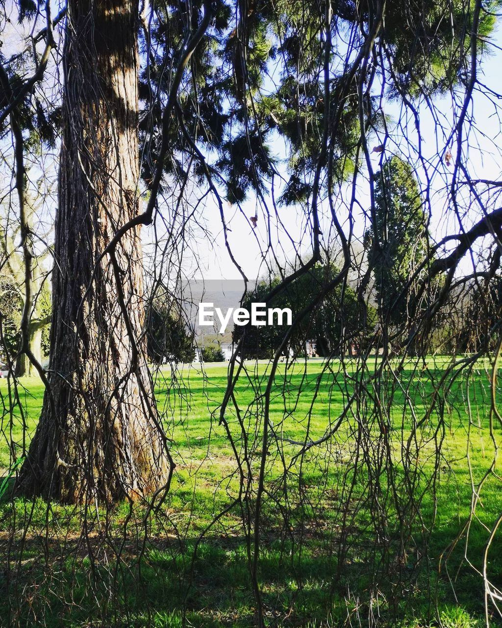 grass, tree, field, nature, tranquility, growth, beauty in nature, landscape, tranquil scene, day, no people, outdoors, green color, scenics, tree trunk, sky