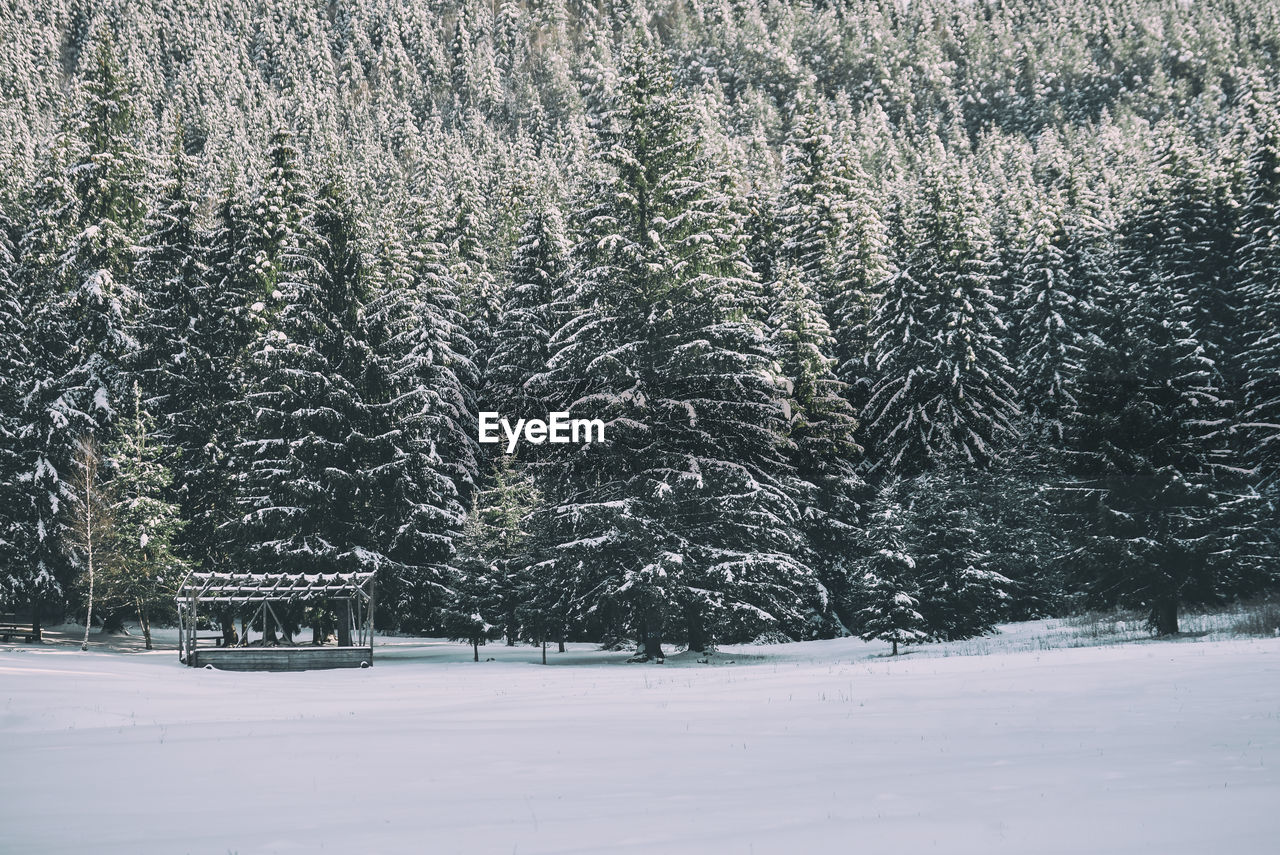 View Of Trees During Winter