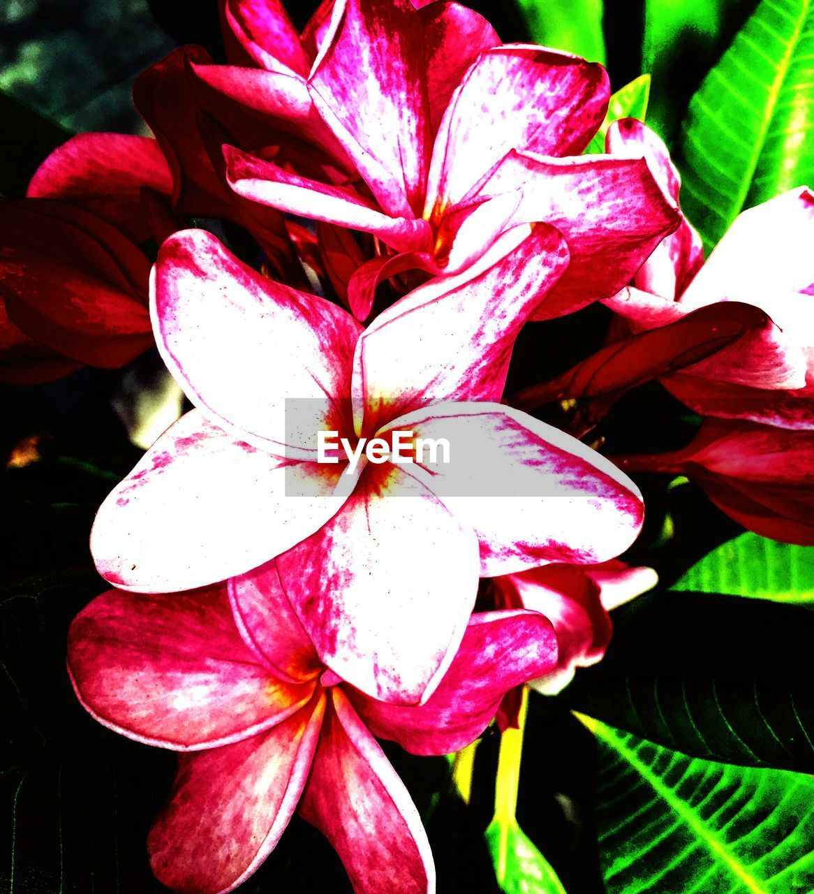 flower, petal, beauty in nature, fragility, nature, flower head, growth, close-up, freshness, day, outdoors, no people, pink color, plant