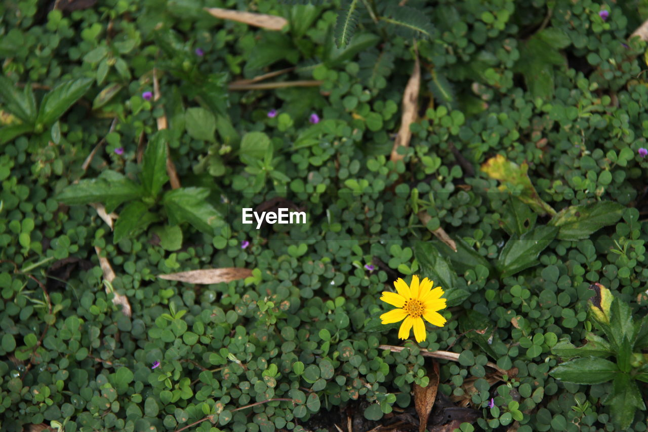 plant, flowering plant, growth, flower, freshness, beauty in nature, green color, fragility, plant part, vulnerability, leaf, nature, flower head, petal, day, close-up, inflorescence, no people, yellow, high angle view, outdoors