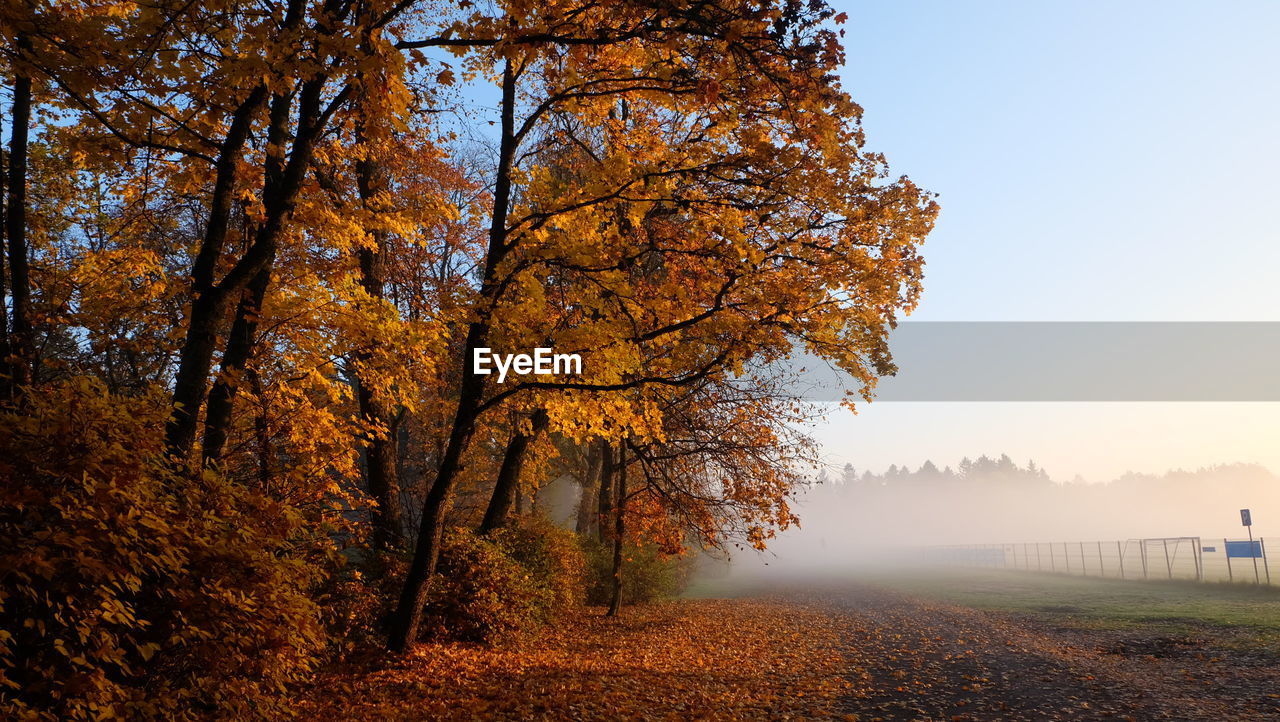 tree, autumn, change, plant, orange color, nature, beauty in nature, land, tranquility, sky, tranquil scene, growth, non-urban scene, scenics - nature, no people, day, autumn collection, leaf, plant part, field, outdoors, fall