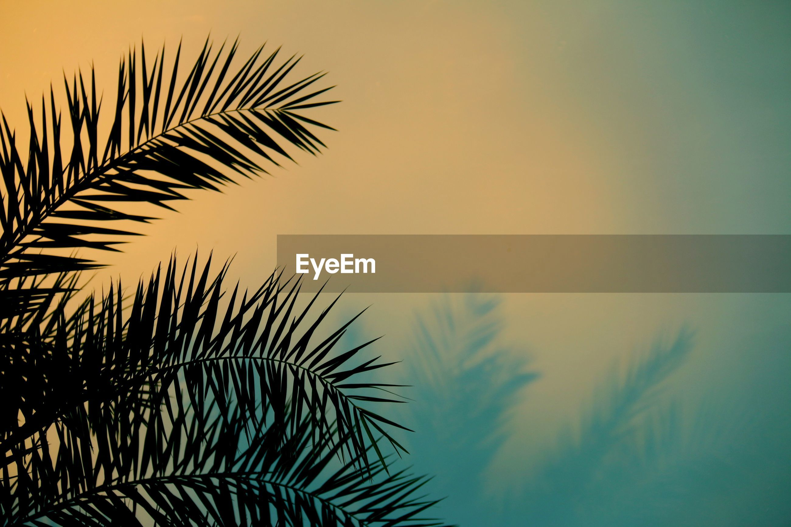 Close-up of palm tree against colored background