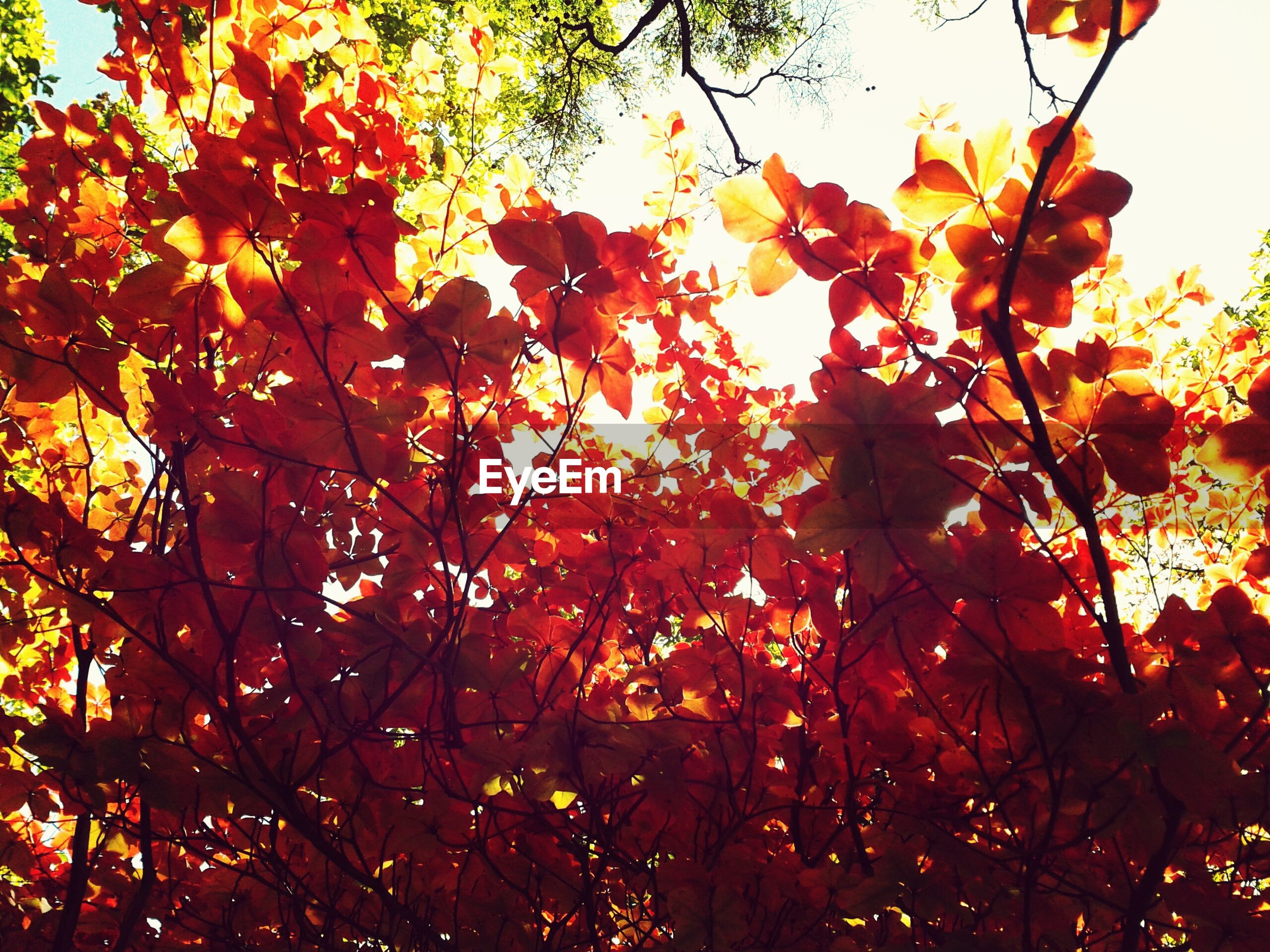 autumn, tree, low angle view, change, branch, growth, leaf, season, orange color, beauty in nature, nature, backgrounds, full frame, tranquility, day, outdoors, clear sky, no people, red, sky