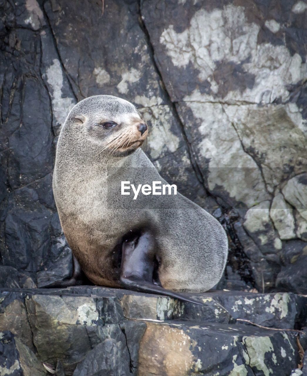 animal themes, animal, animal wildlife, animals in the wild, one animal, rock, solid, rock - object, mammal, underwater, vertebrate, no people, aquatic mammal, day, nature, seal - animal, relaxation, outdoors, seal, zoo, sea lion, marine, whisker
