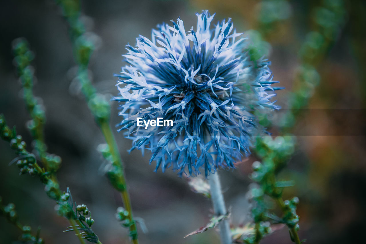 flower, nature, fragility, beauty in nature, growth, petal, plant, flower head, freshness, blooming, no people, spring, day, outdoors, close-up