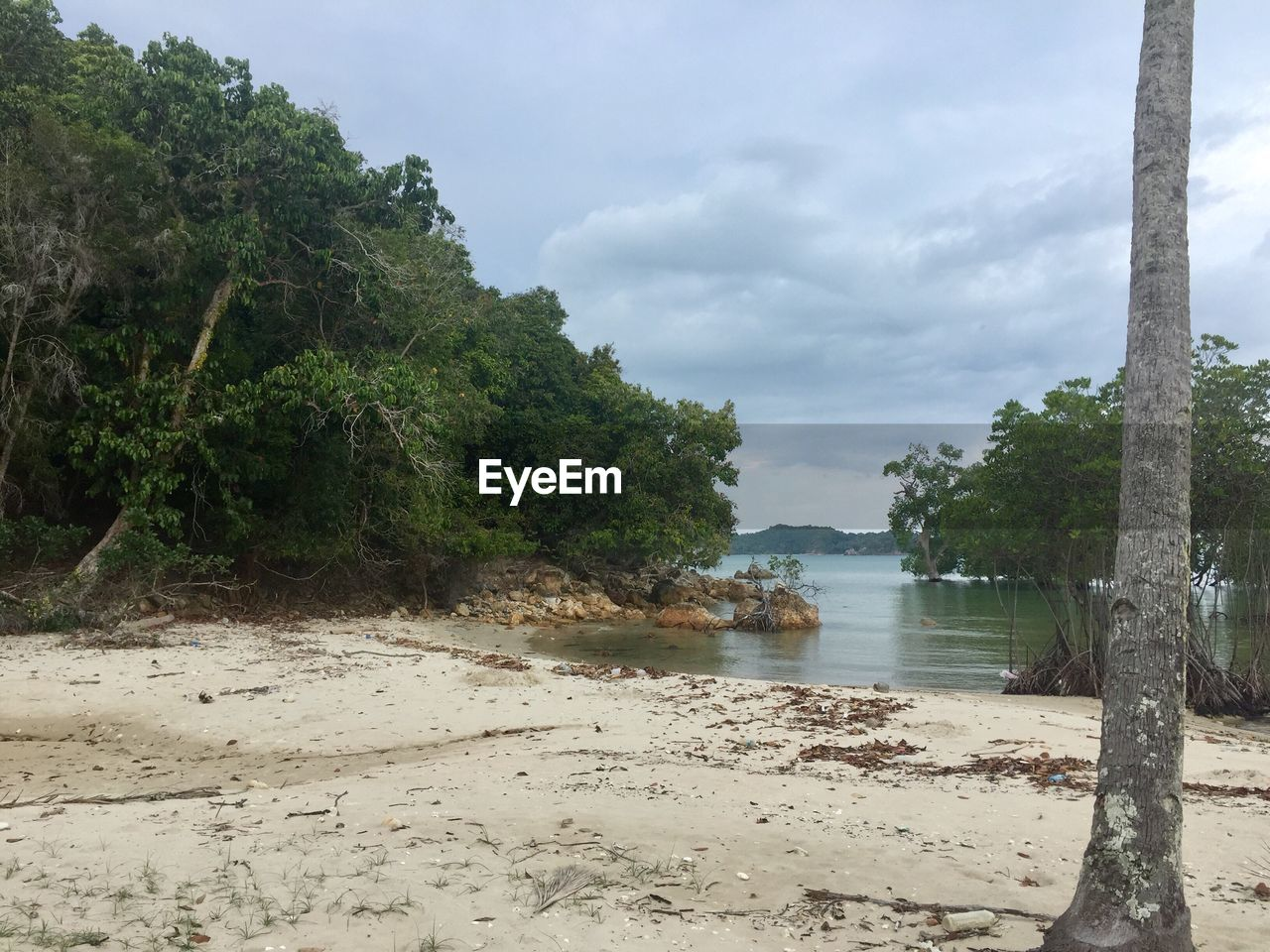 tree, plant, water, sky, land, beauty in nature, nature, scenics - nature, beach, day, tranquility, growth, cloud - sky, sea, tranquil scene, no people, non-urban scene, sand, outdoors