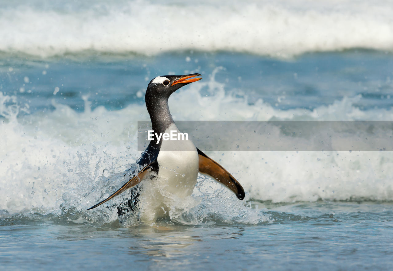 VIEW OF A BIRD IN SEA